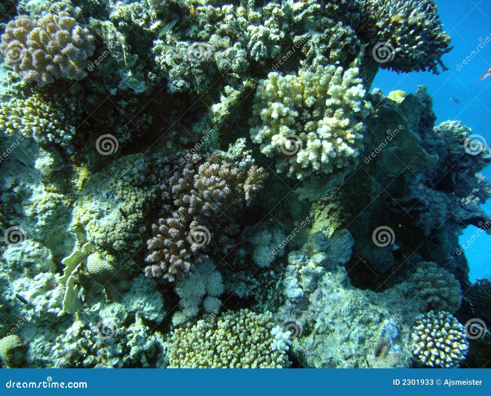 Tour de coral.jpg