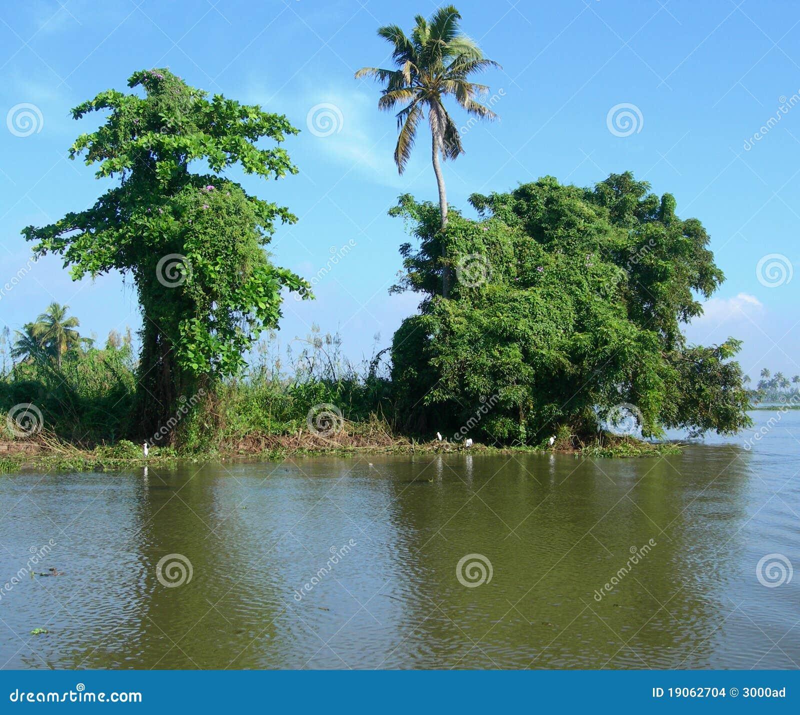 Tourism In India Lush Vegetation Kerala Stock Images