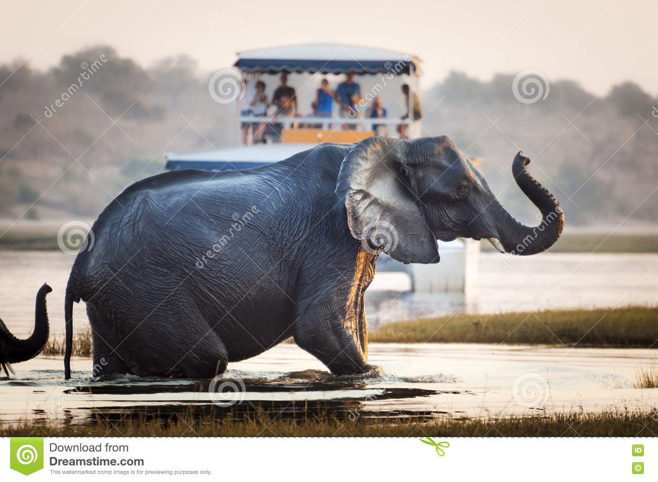 Tourist watching an elephant crossing a river in the Chobe National Park in Botswana, Africa