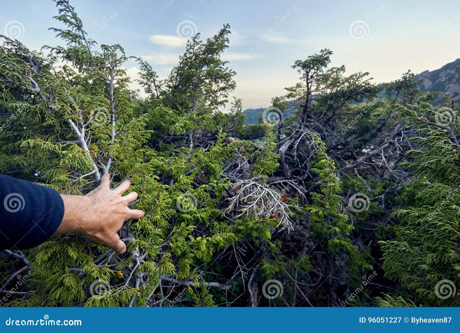 Touriste dans la forêt