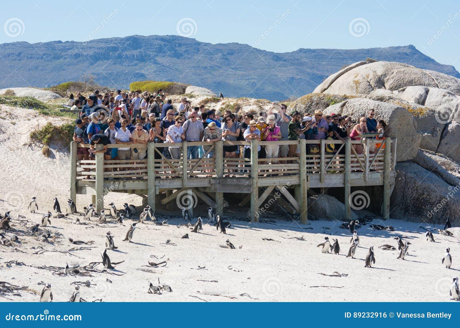 Touristes à la colonie de pingouin de rochers, Simonstown