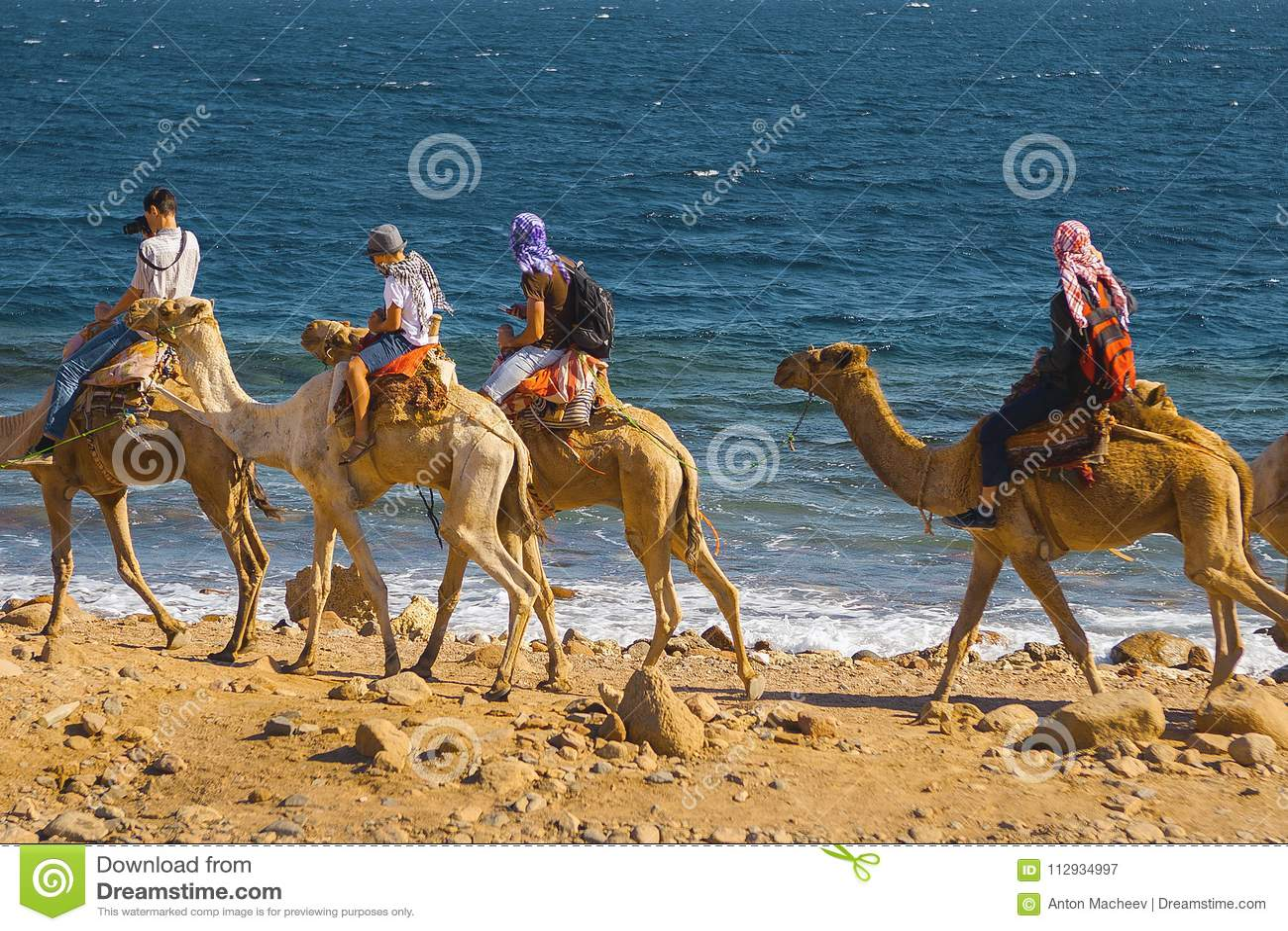 Touristes sur des chameaux en Egypte
