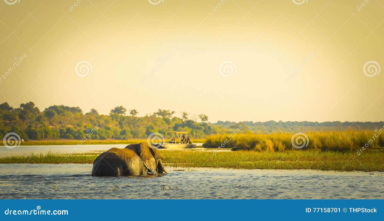 Touristes sur l éléphant Safari Africa