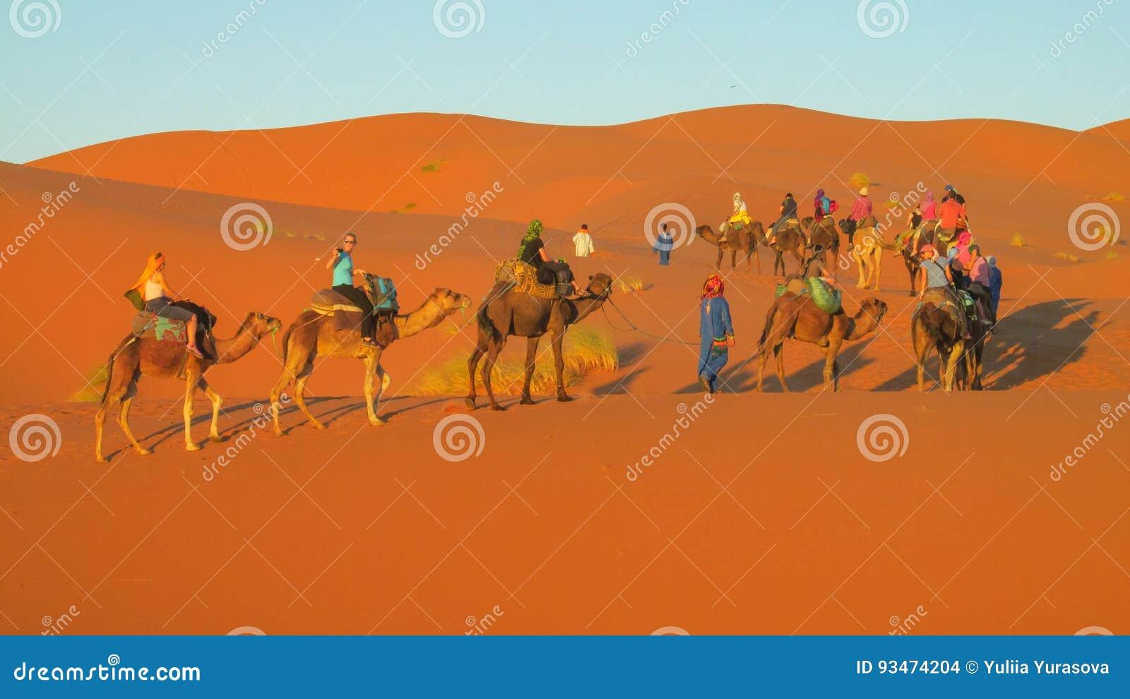 Touristic camel caravan in desert