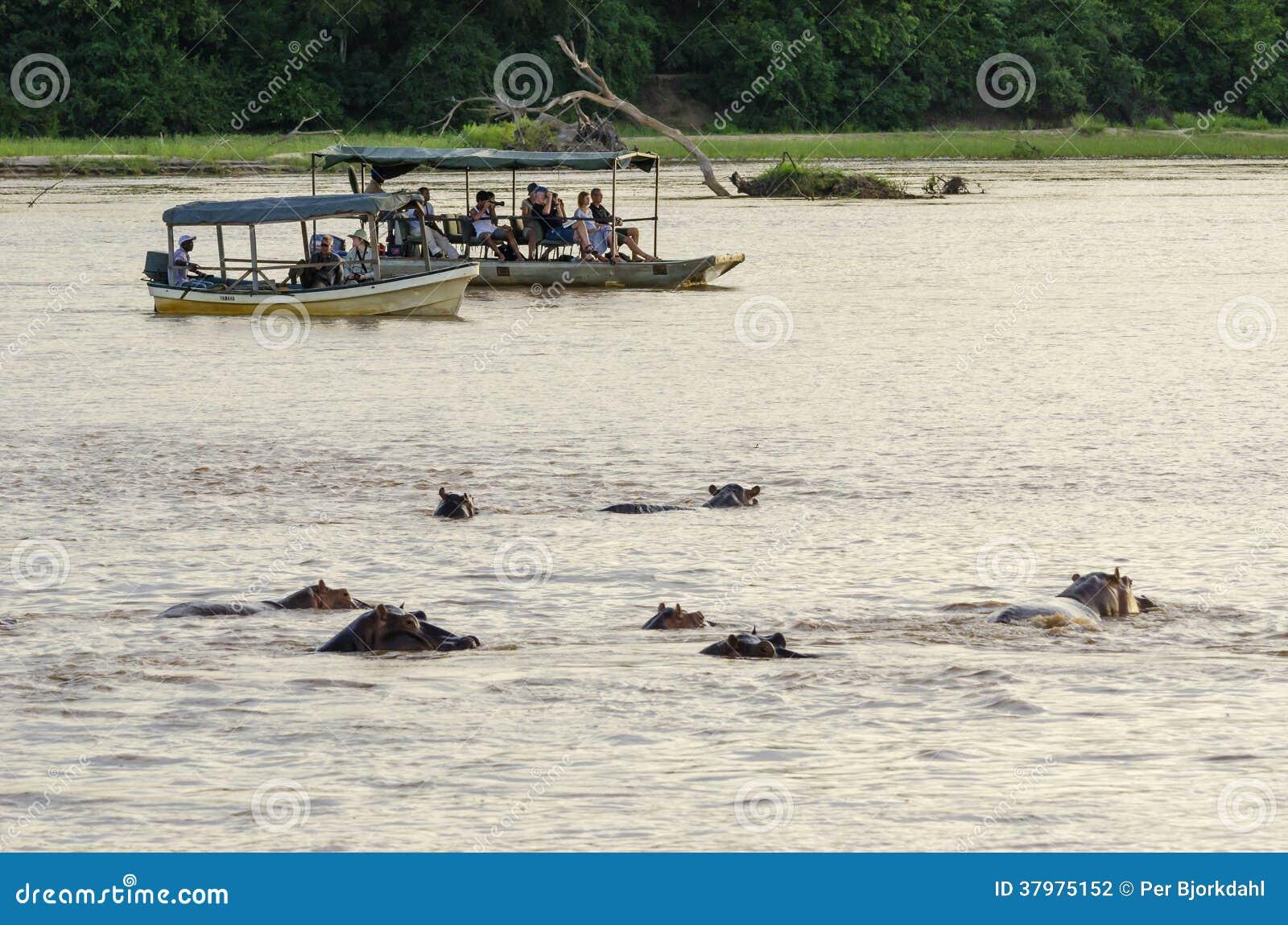 Tourists watching hippos