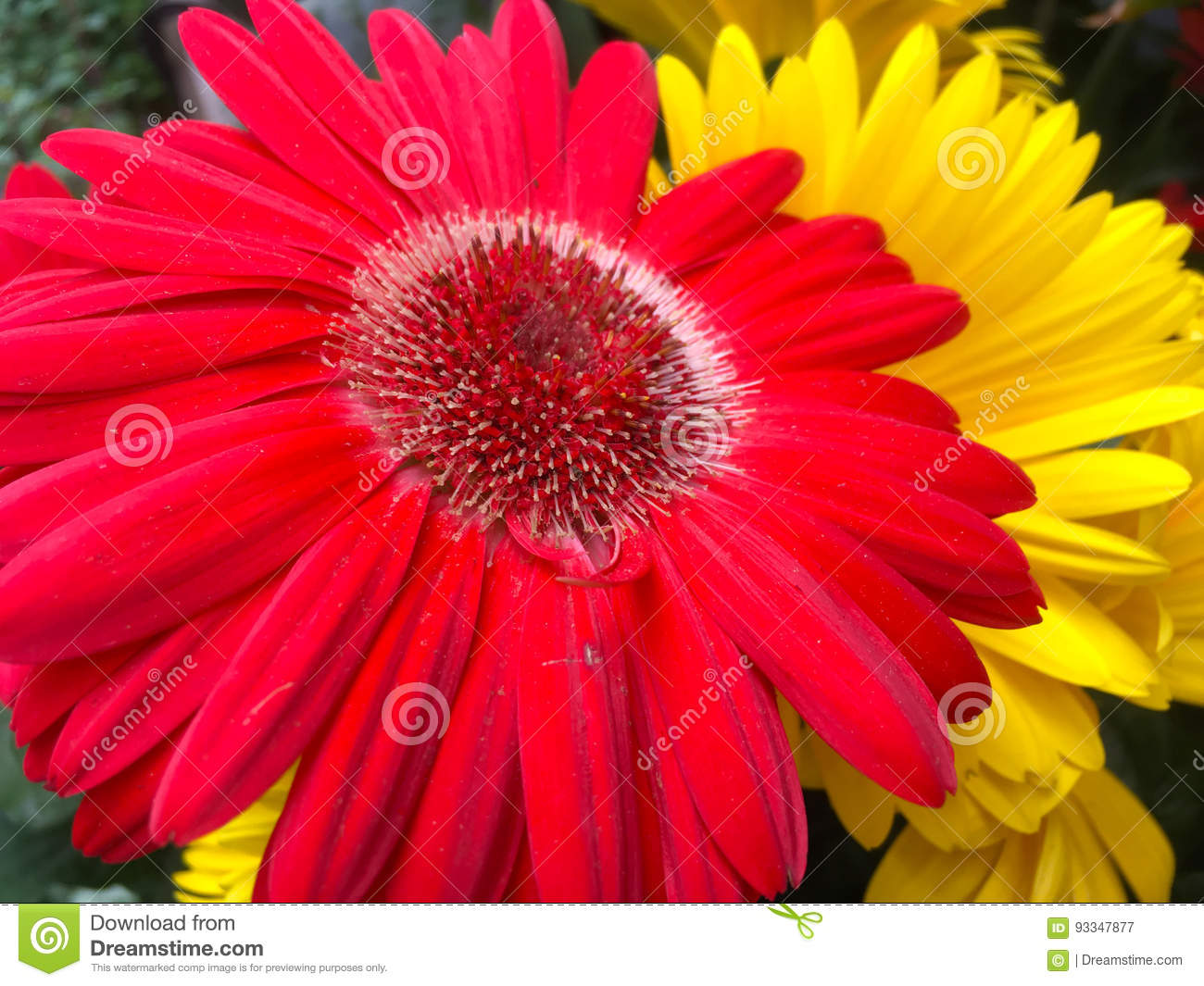 Tournesol Stock Image Image Of Fleur Amateur Yellow 93347877
