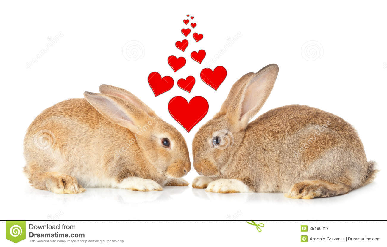 Tow Cute Rabbits In Love Royalty Free Stock Photos - Image: 35190218
