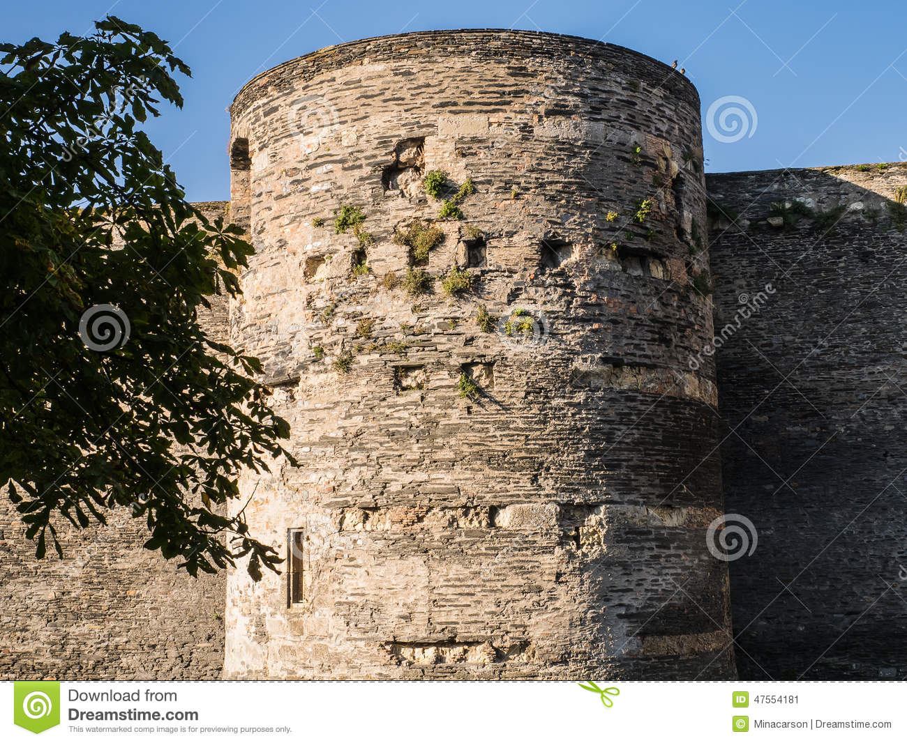 Tower at Angers chateau with foliage growing from the stones, Fr