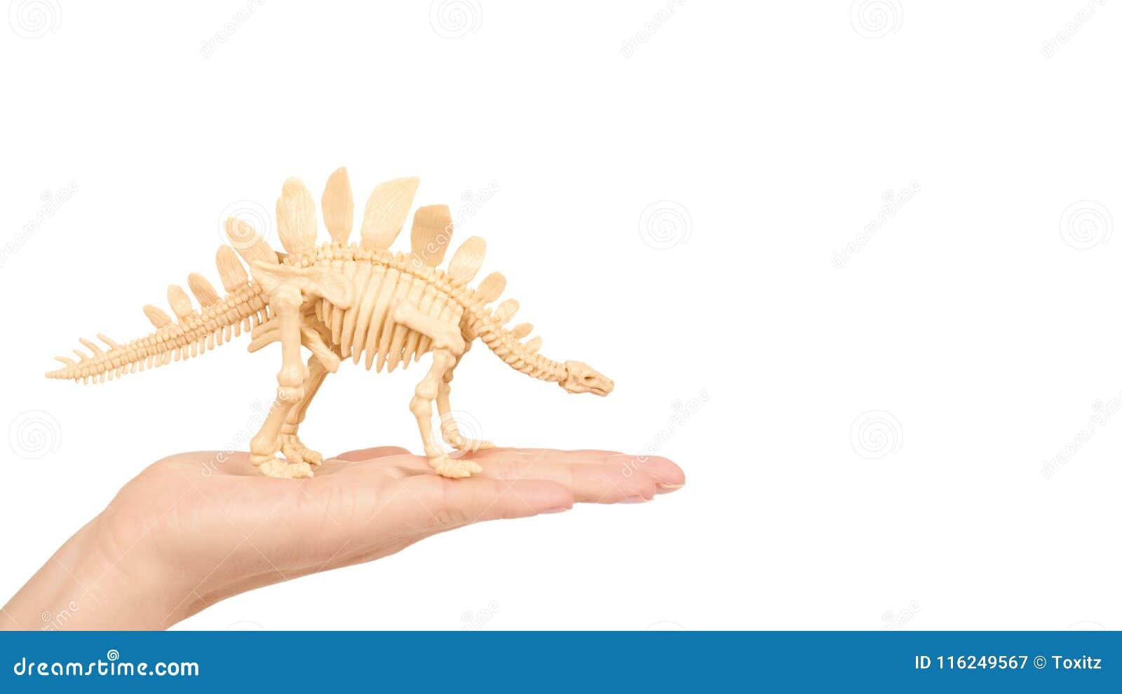 Toy Animal Dinosaur Skeleton di plastica a disposizione isolato su fondo bianco copi lo spazio, modello