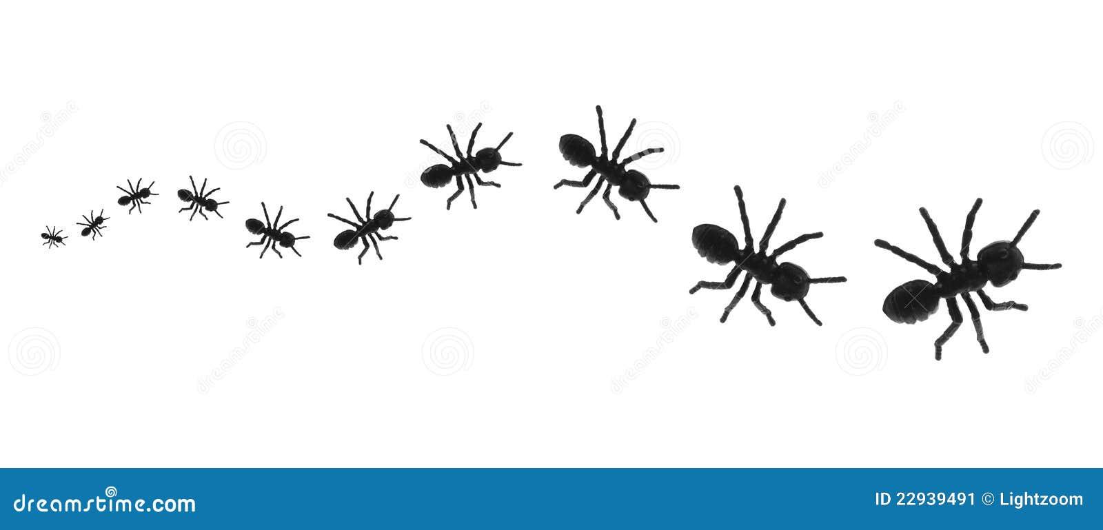 Ants In A Line Clip Art Download standard clip art