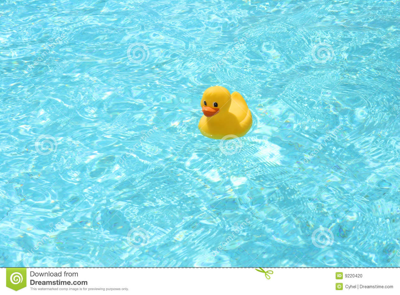 Toy Duck In The Pool Stock Photo Image 9220420