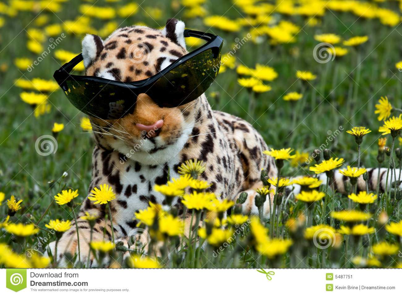 Toy Leopard Stock Image Image Of Cuddly Attitude