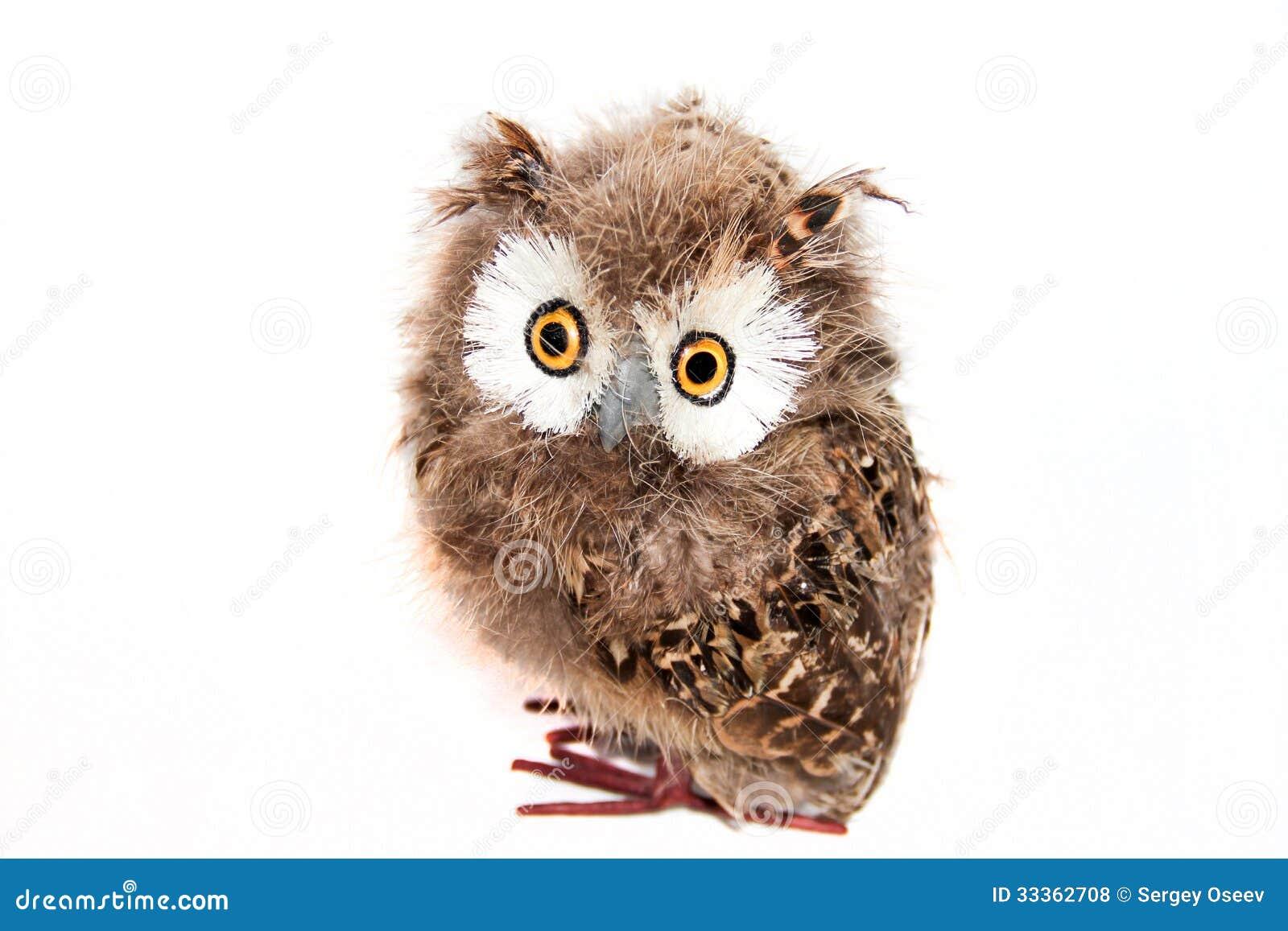 Toy owl