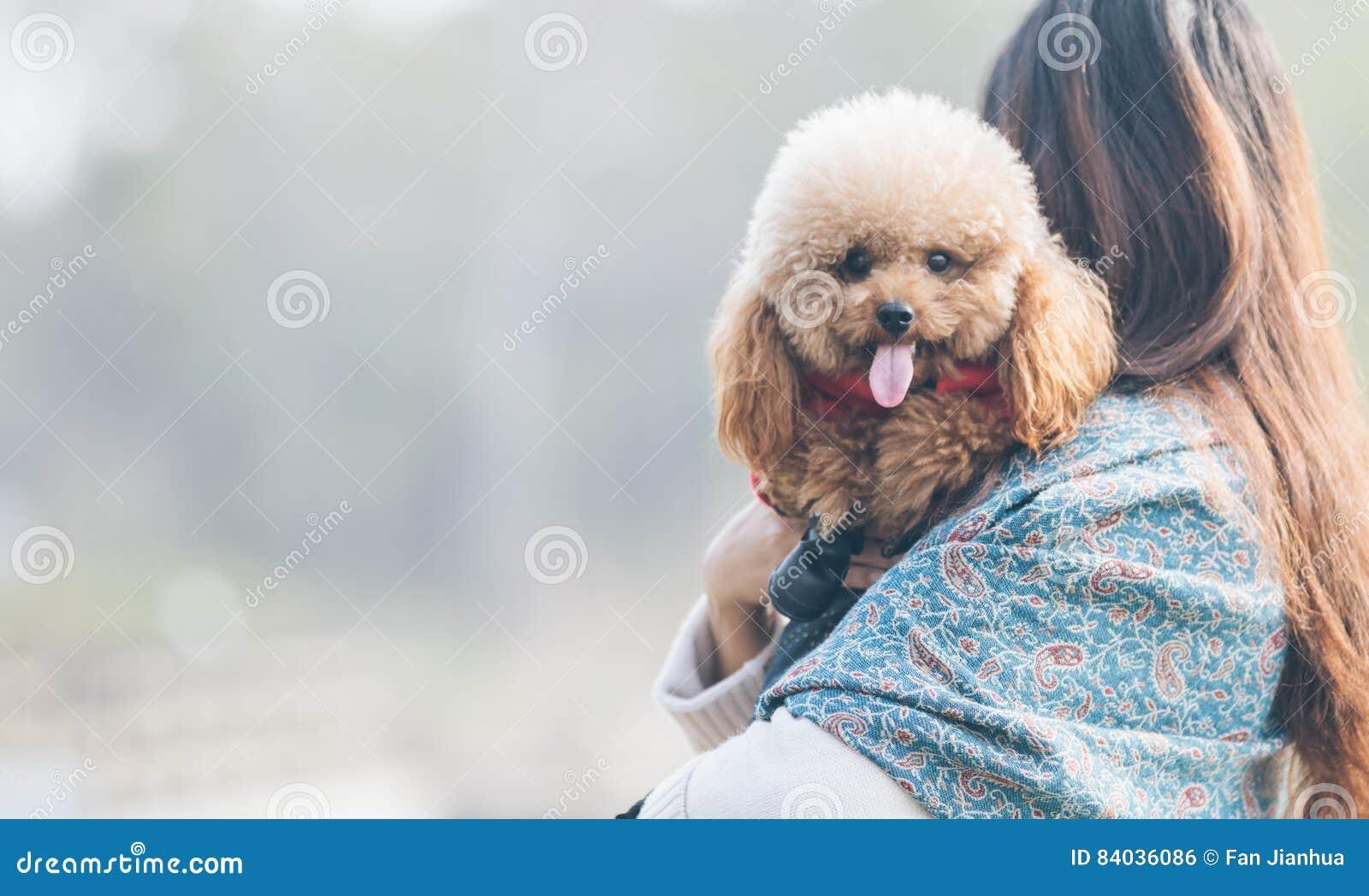 Toy Poodle som spelar med dess kvinnliga förlage i en parkera