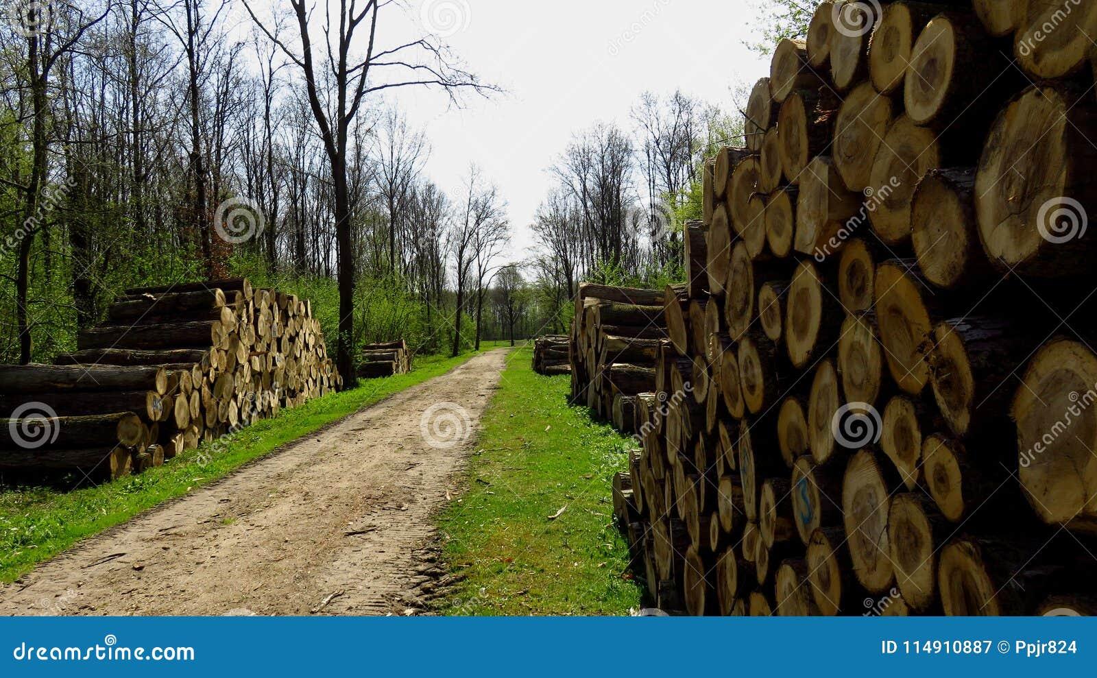 Trä loggar in stora vedtravar längs Forest Pathway