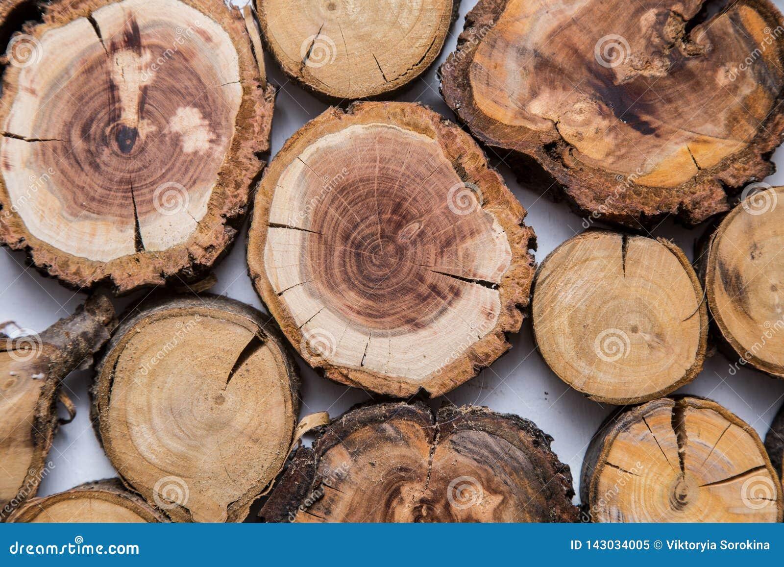 Trä såg det klippta trädet, med cirklar av liv