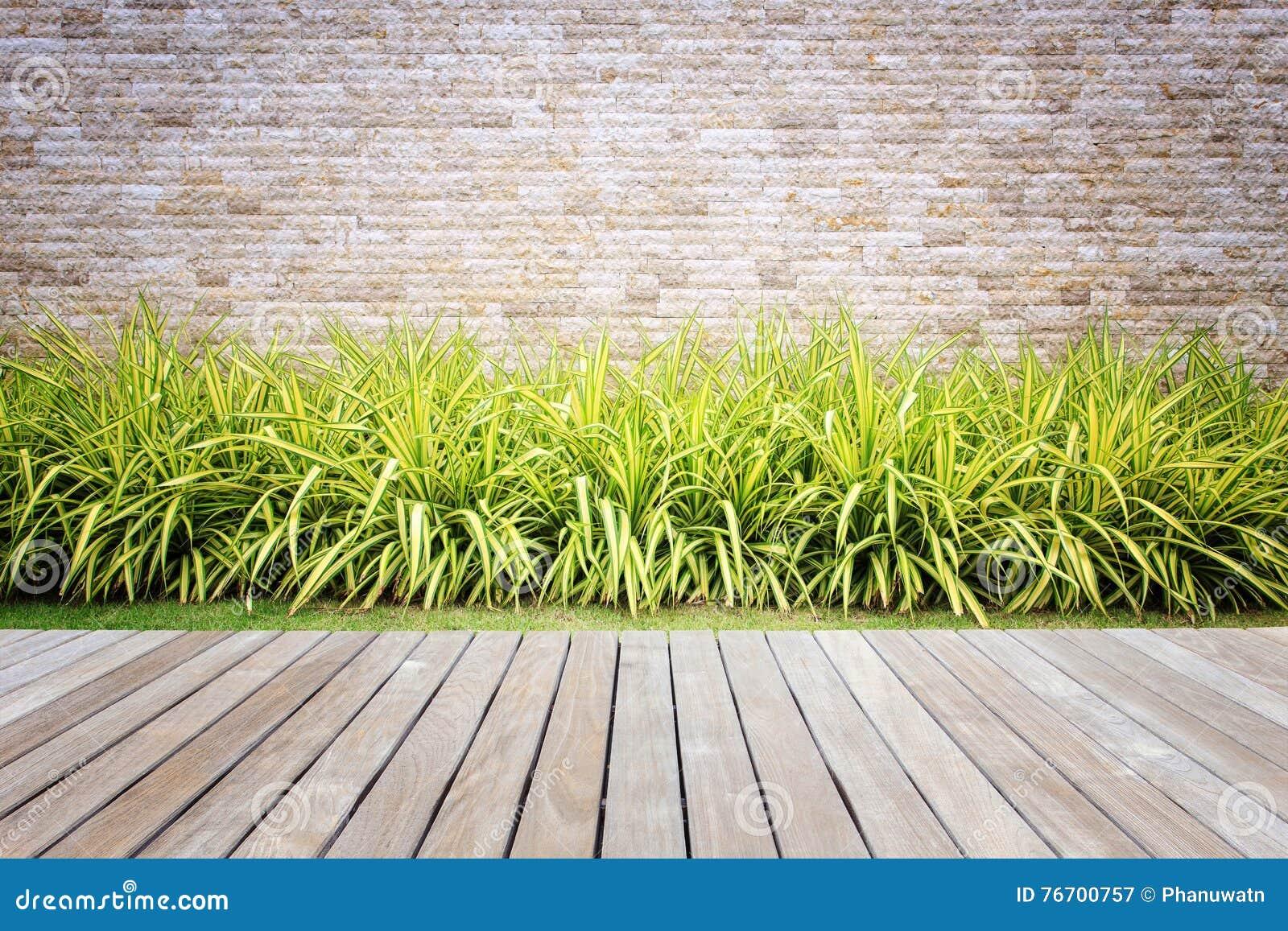 Trä som pryder eller däckar och växt i trädgårds- dekorativt