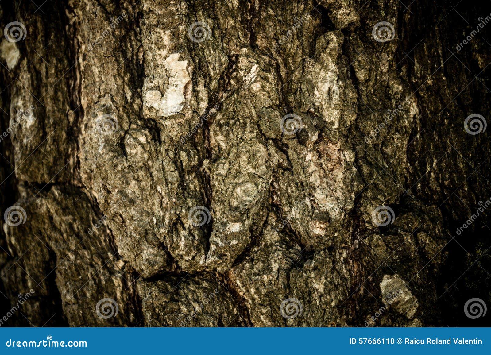Trä texturera
