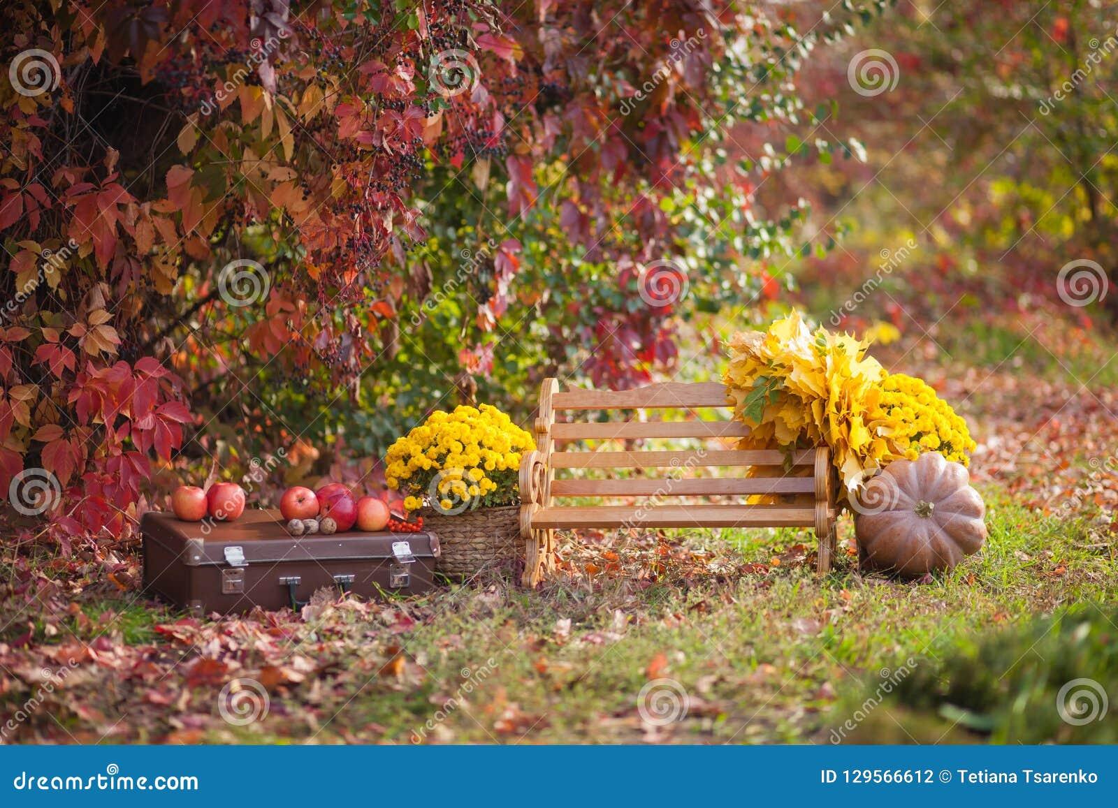 Träbänken i hösten parkerar, en bröstkorg, blommor, pumpor med äpplen, atmosfärisk höst