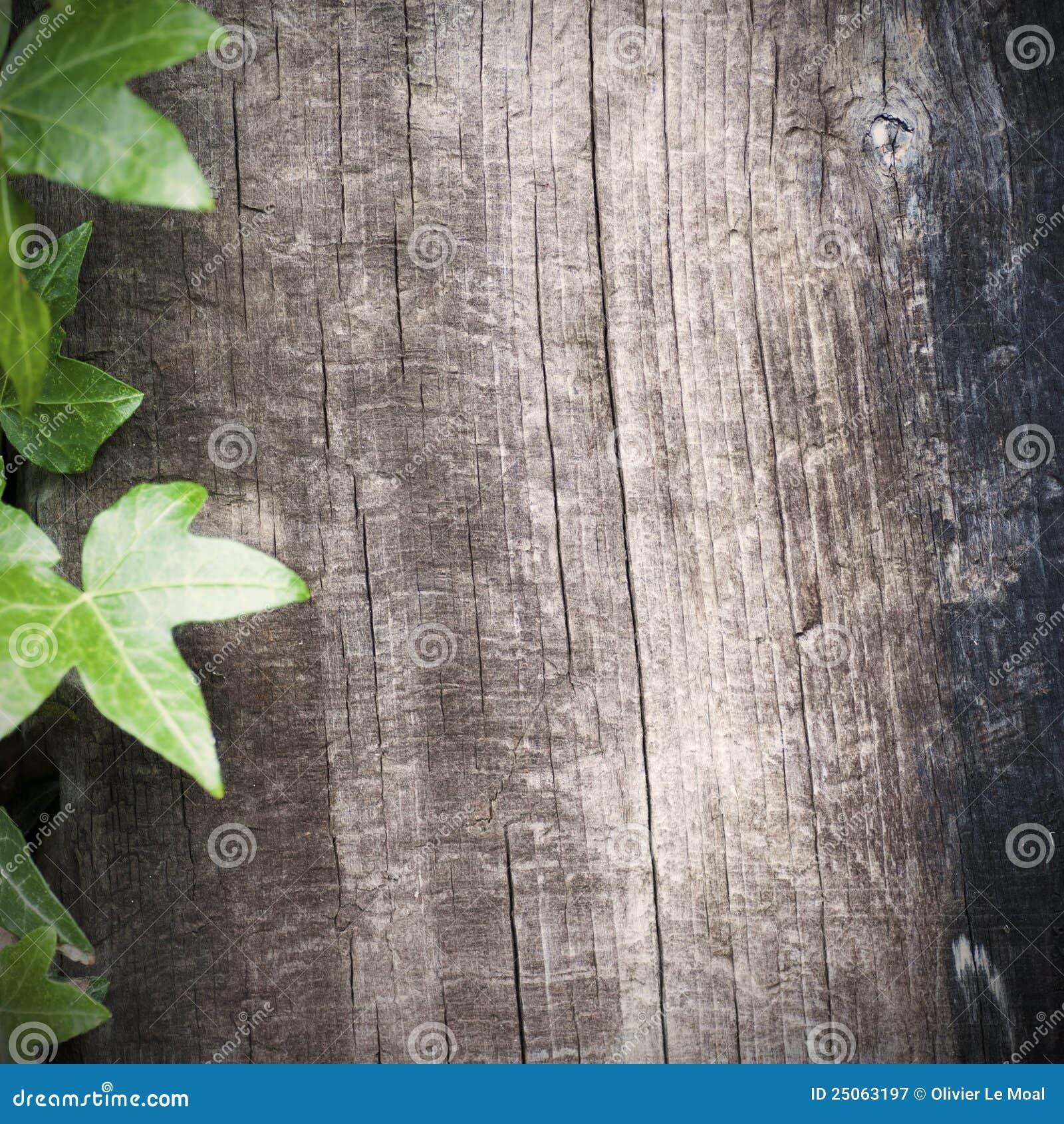 Träbakgrundsmurgröna
