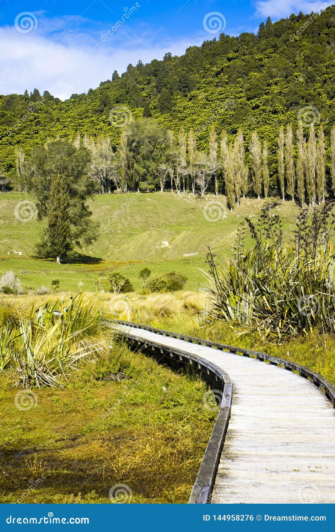 Träbanan till och med våtmarker översvämmar i natur på solig dag, med träd i avstånd