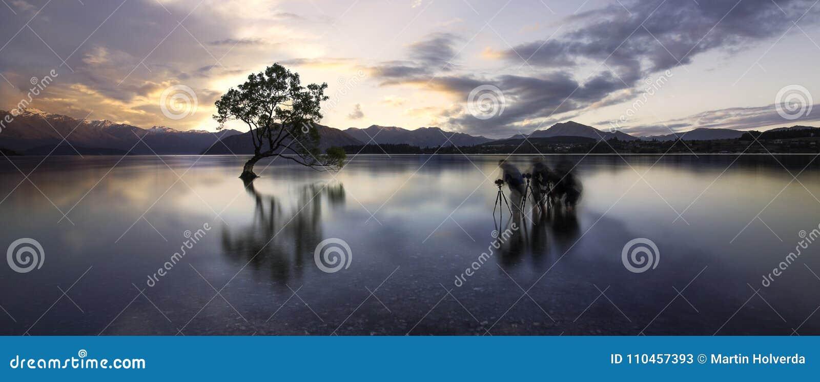 Träd för sjötekapowanaka