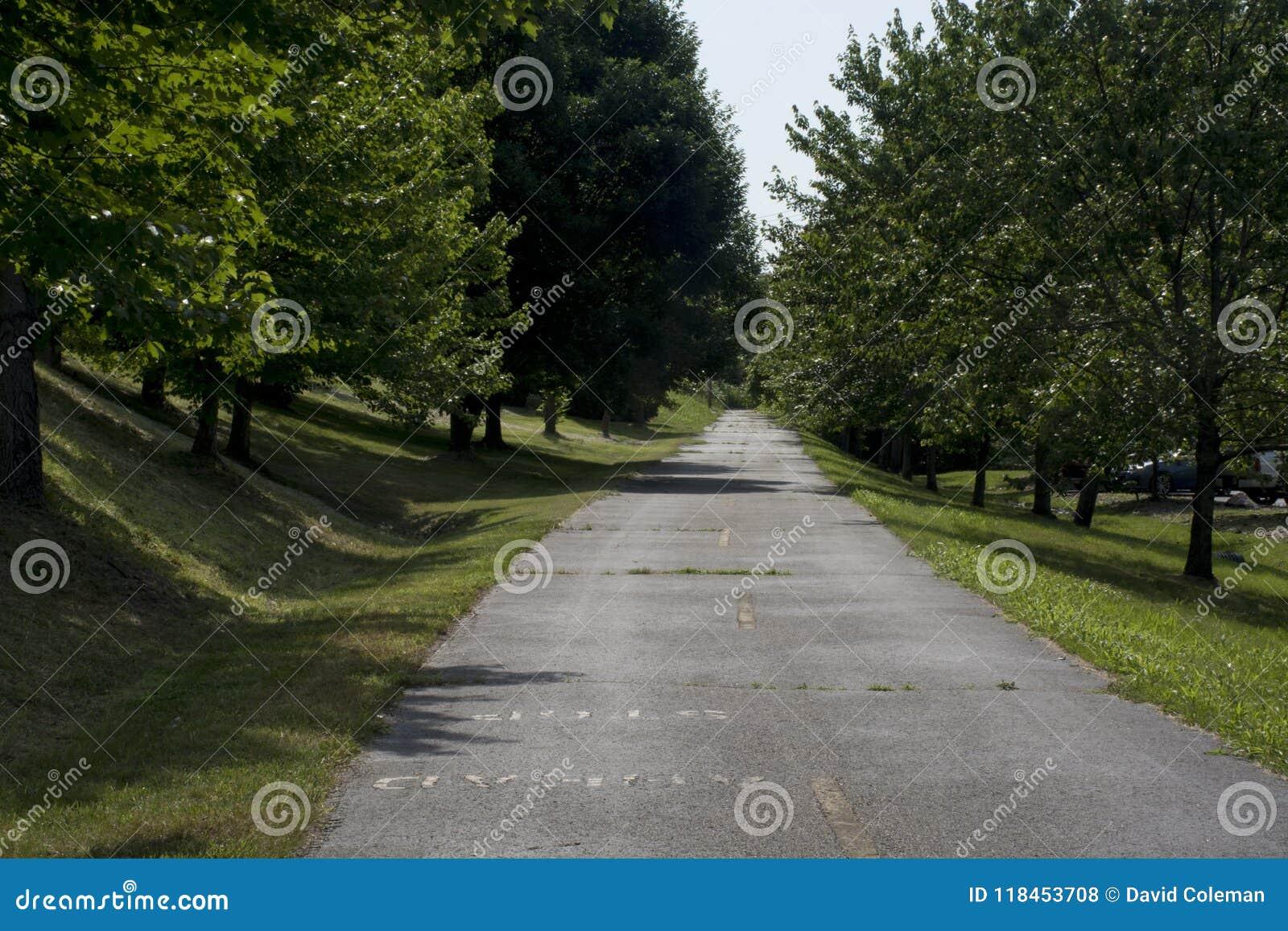 Träd fodrad cykelbana