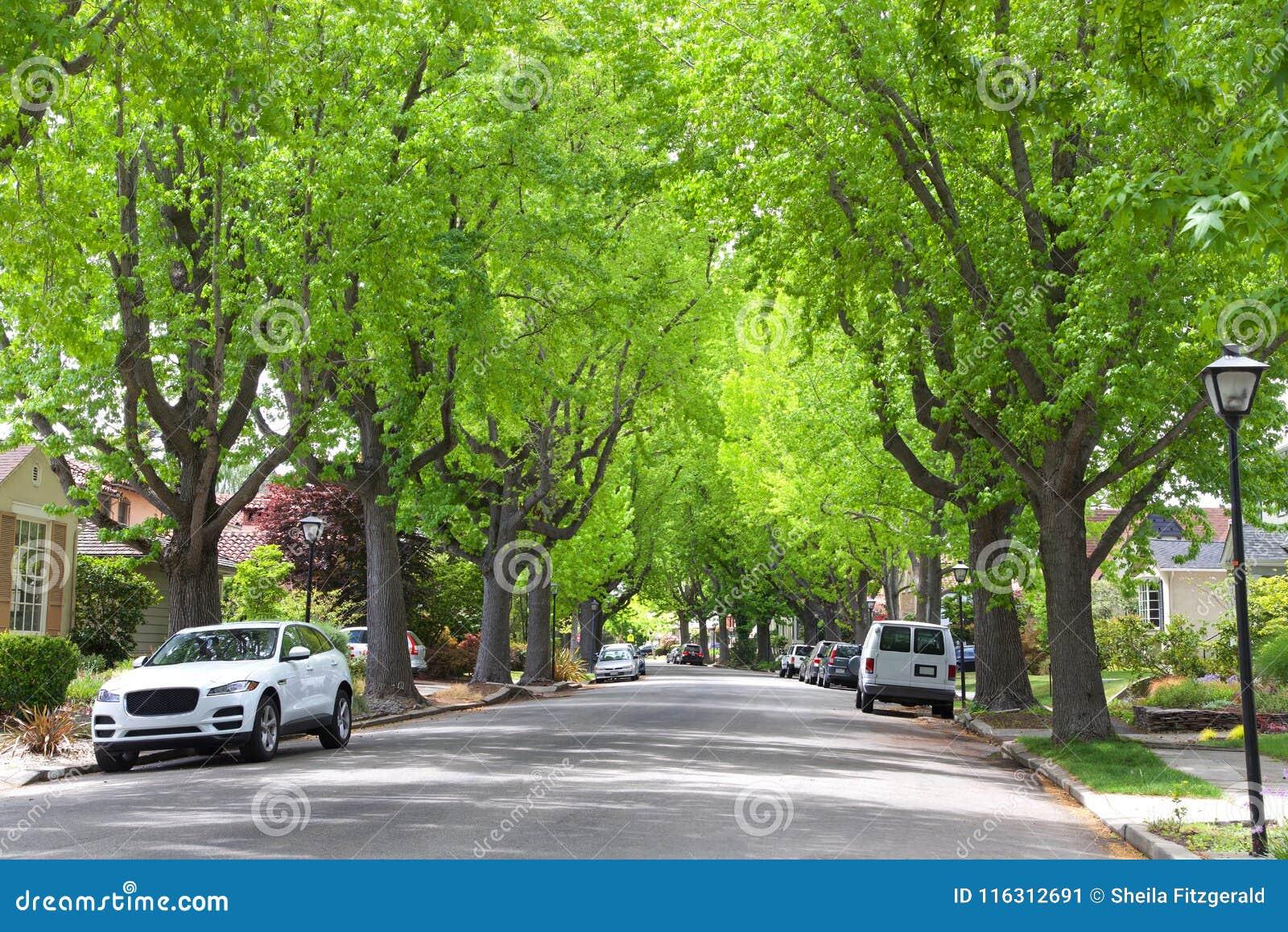 Träd fodrad grannskap med lampstolpar