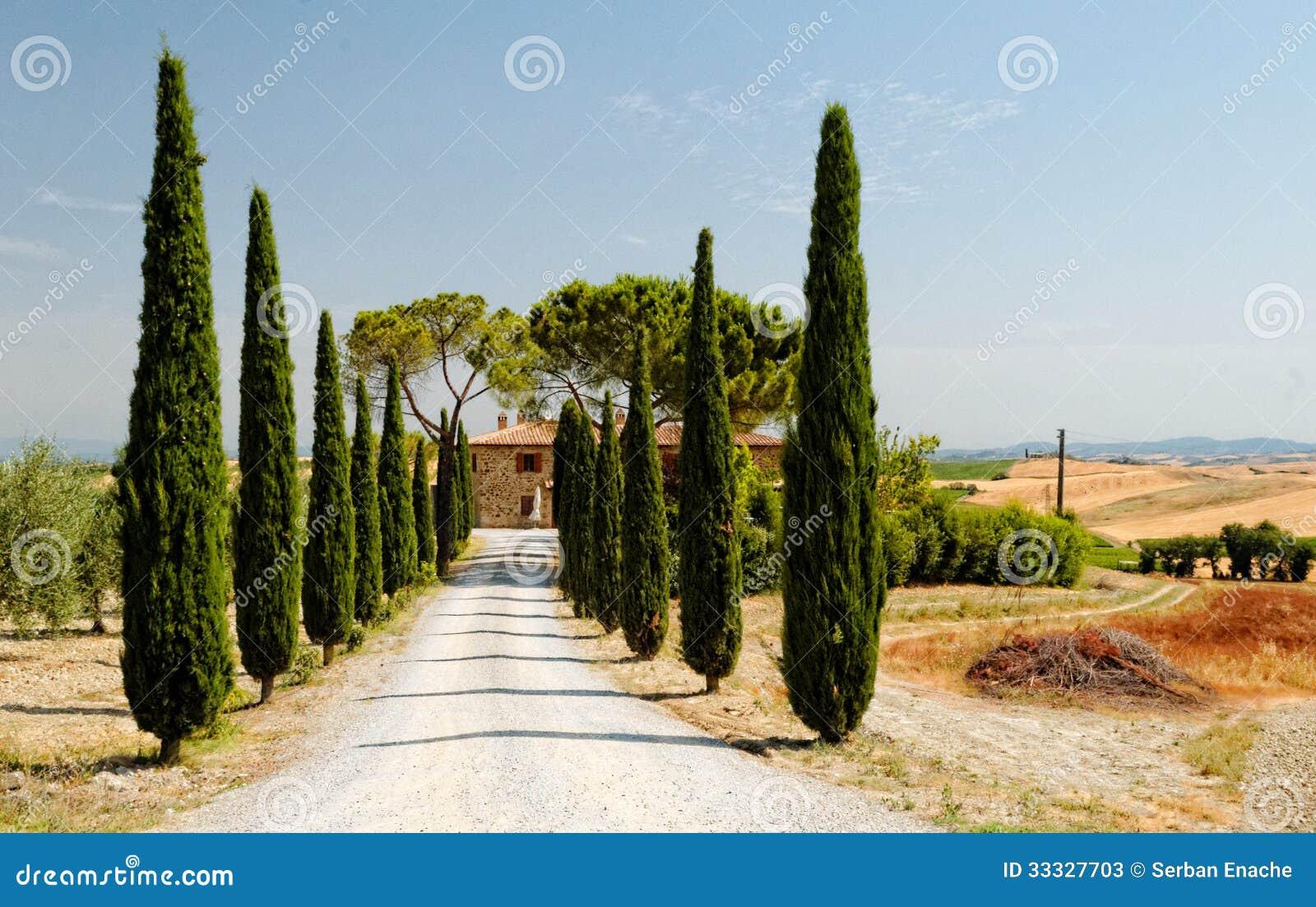 Träd fodrad väg i tuscany