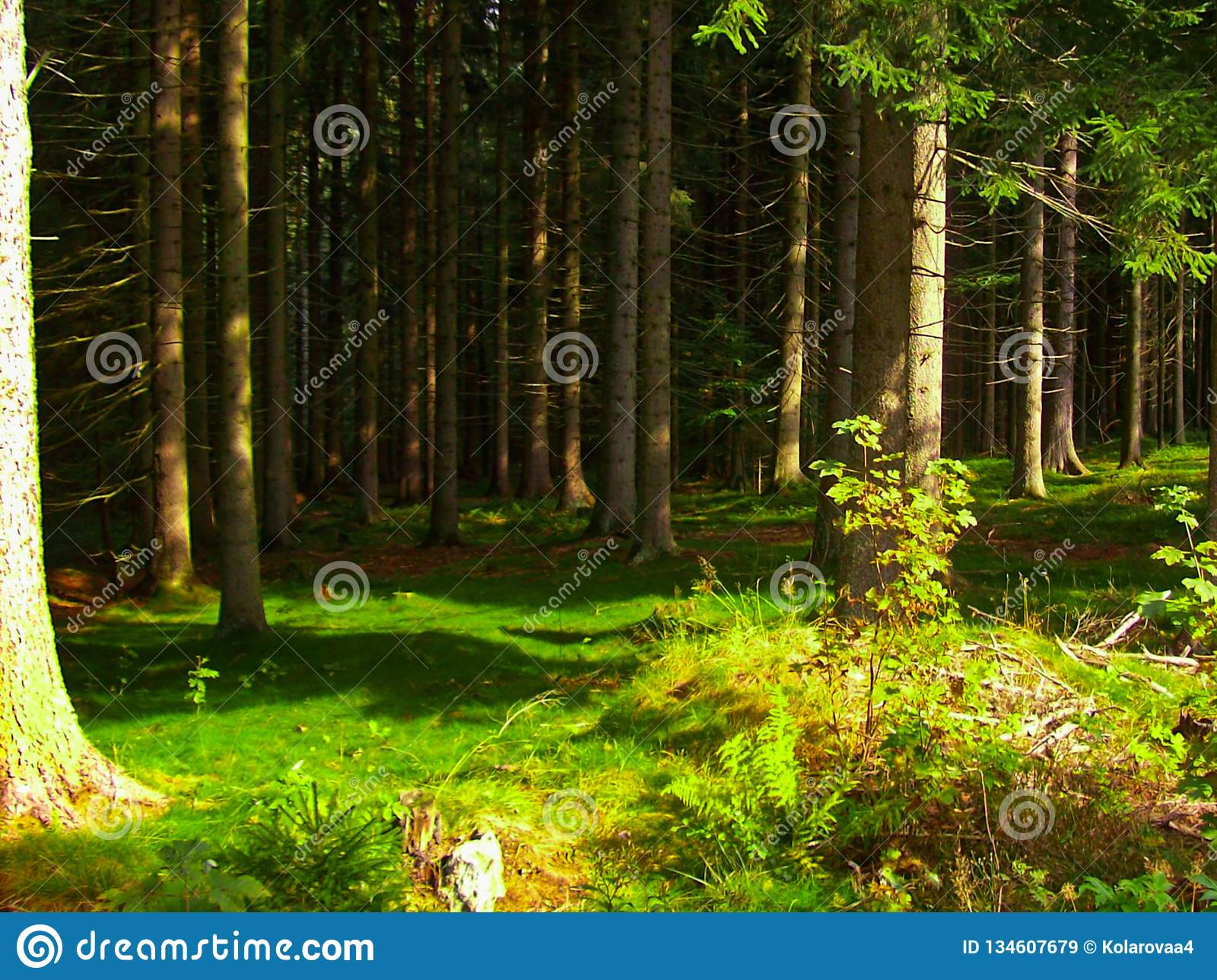 Träd i en grön skog