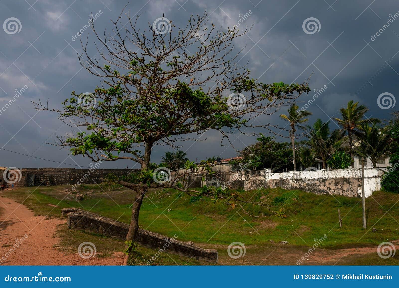 Träd i fort i kuling, Sri Lanka Gammal stad och dramatisk himmel