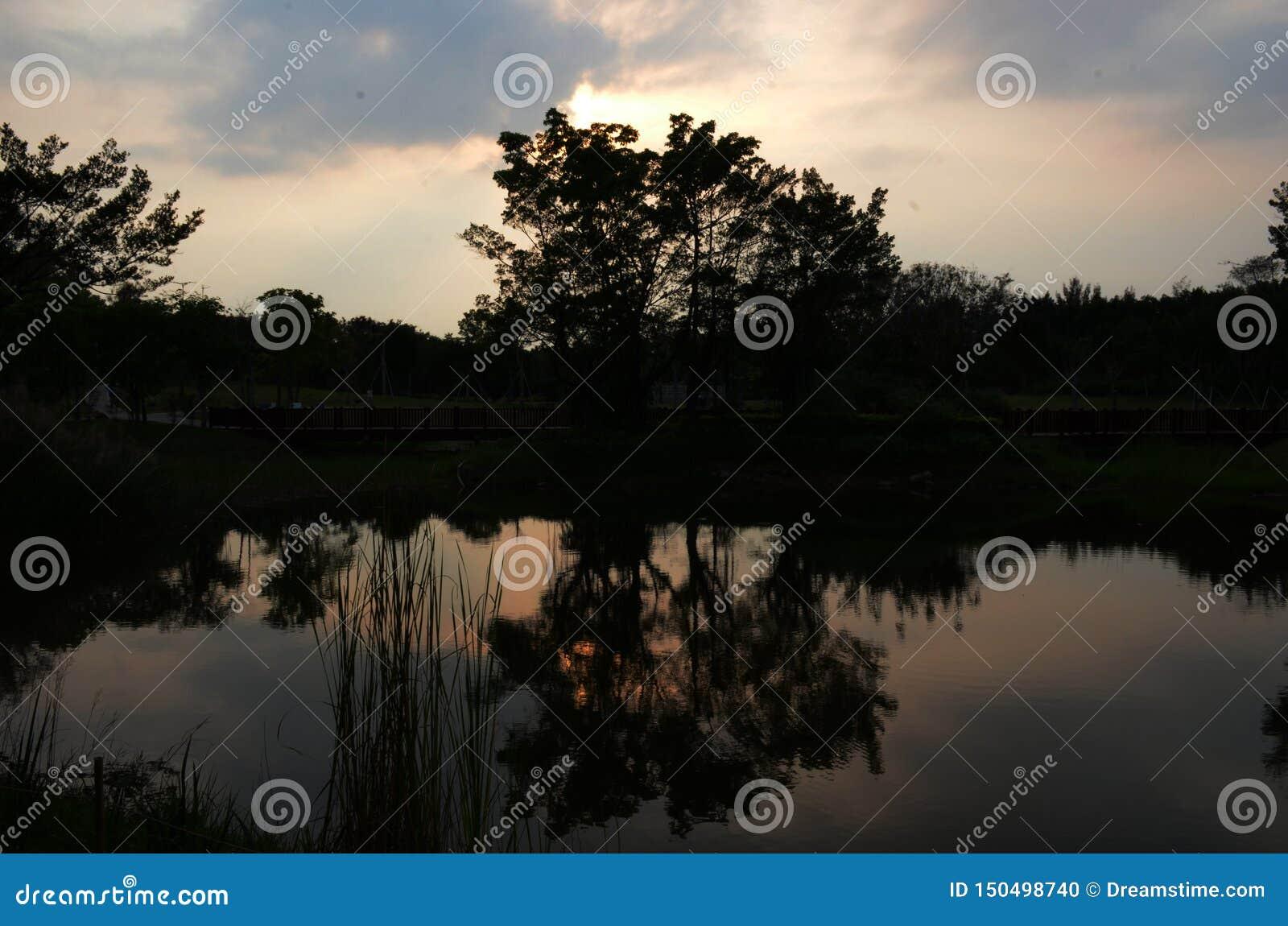 Träd i mörkret med dess skugga i sjön
