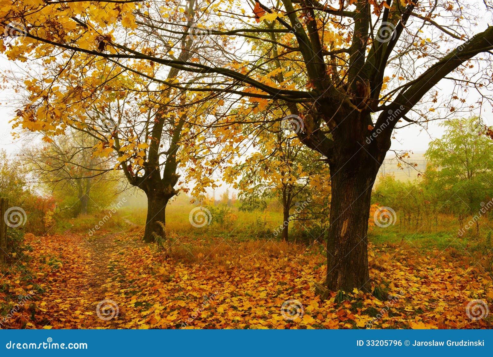 Träd i misten