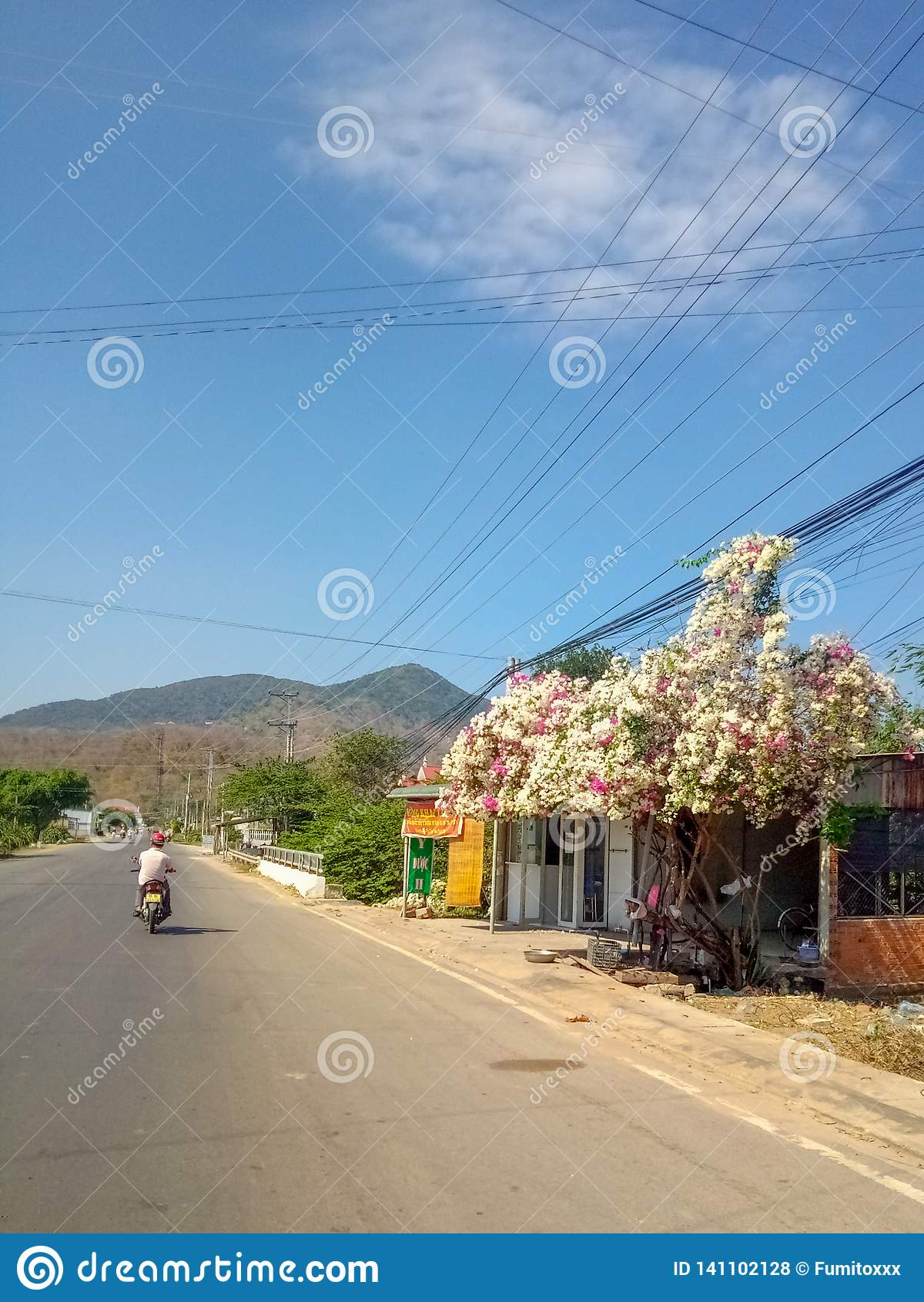 Träd med blommor på en bakgrund av berg