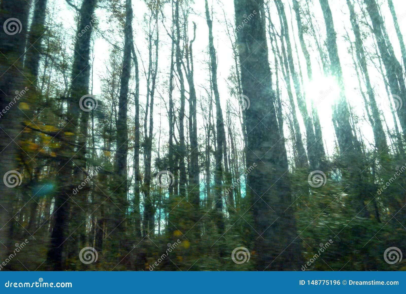Tr?d och buskar i skogm?rker med solen