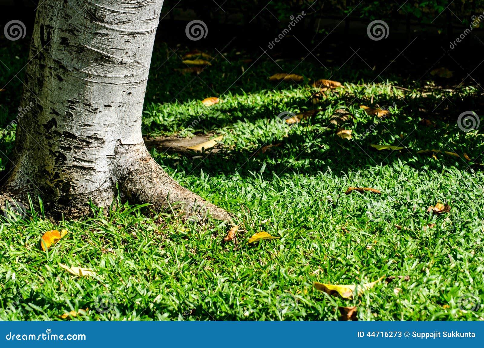 Träd- och gräsbakgrund i middag