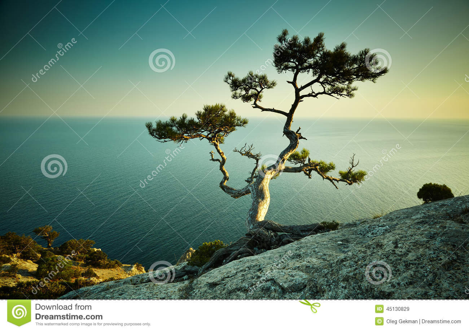 Träd och hav på solnedgången naken sky för blå crimea kullliggande