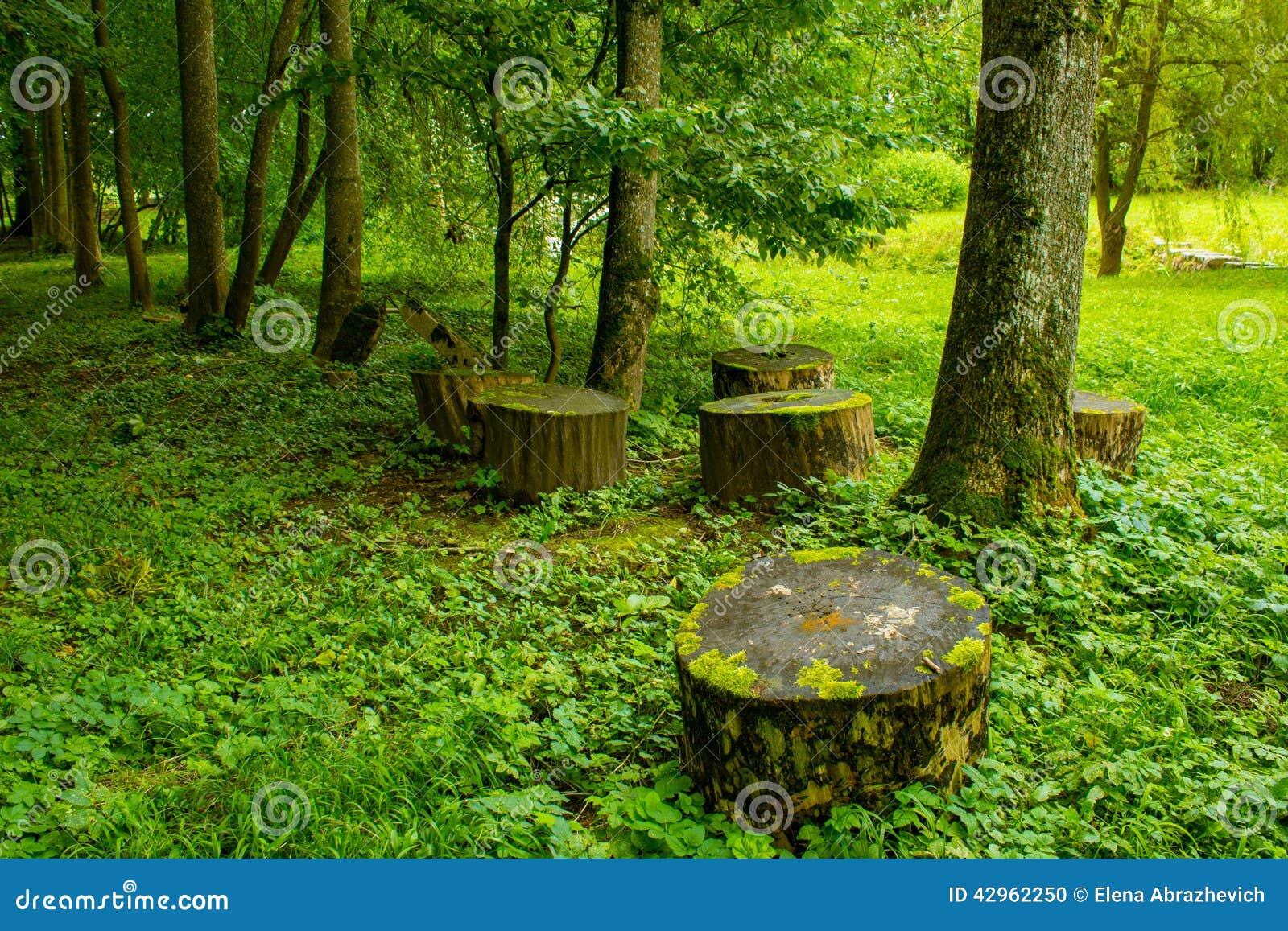 Träd och stubbar i parkera