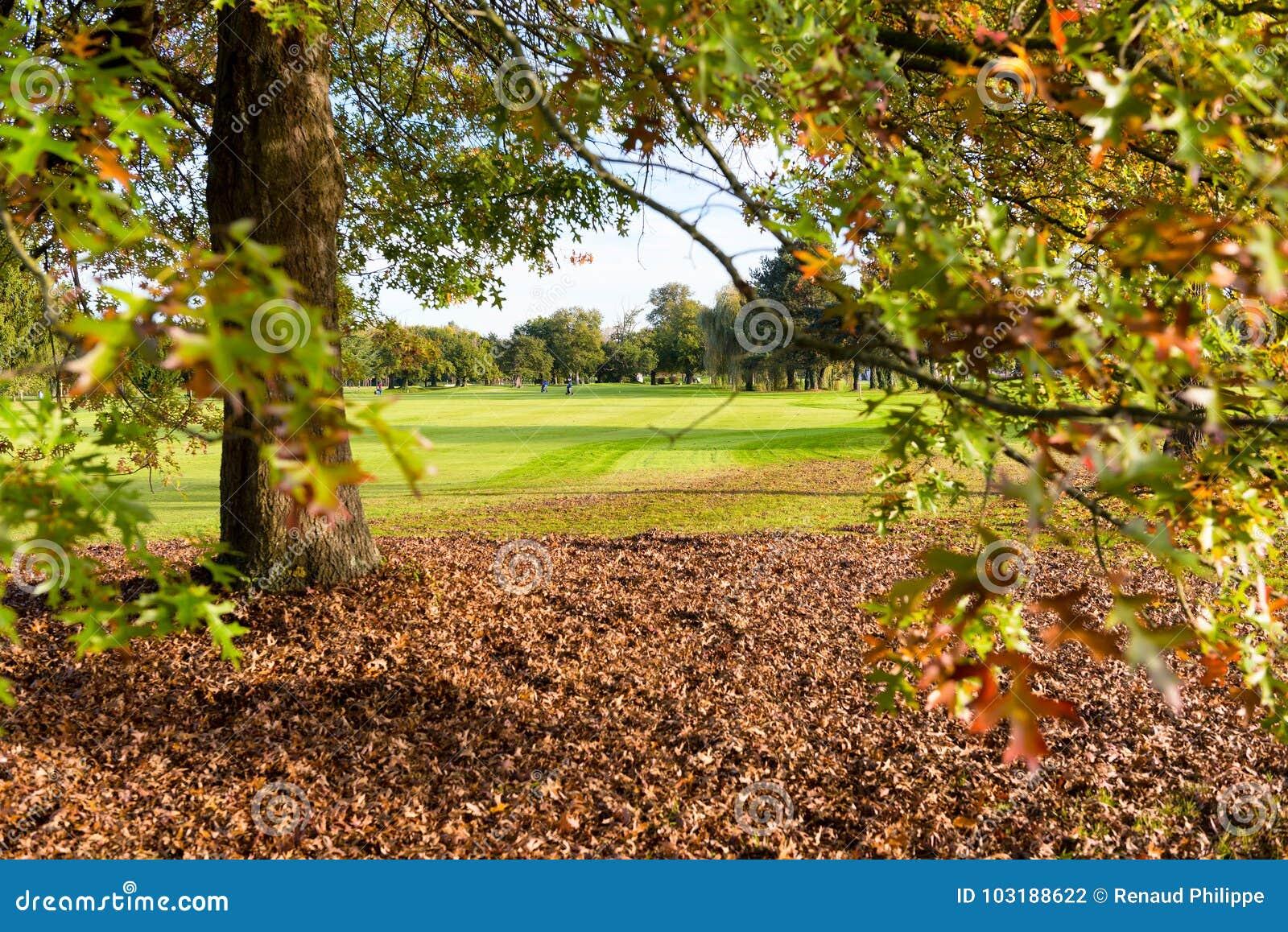 Träd på en golfbana i höst