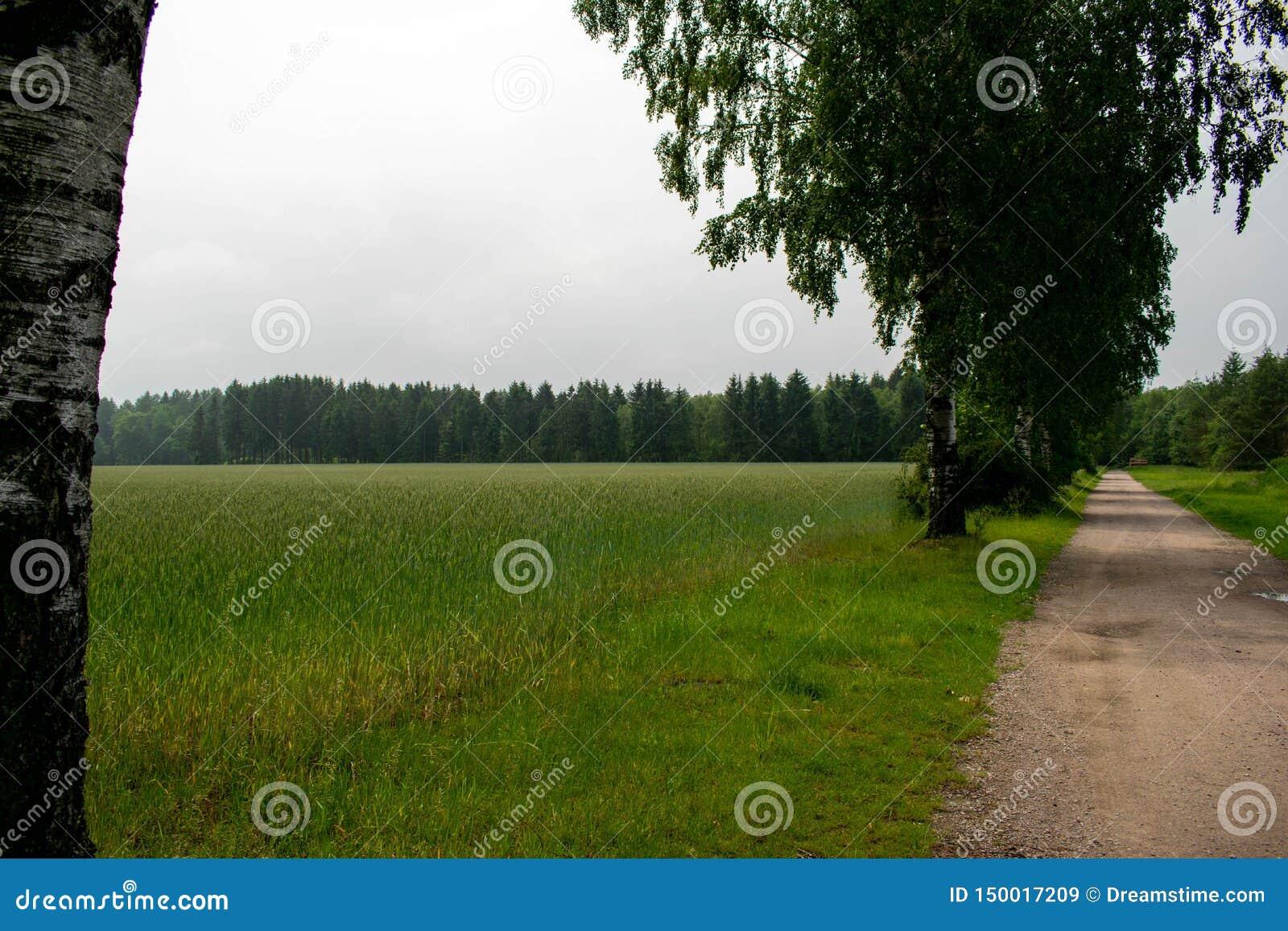 Träd på ett fält bredvid vägen