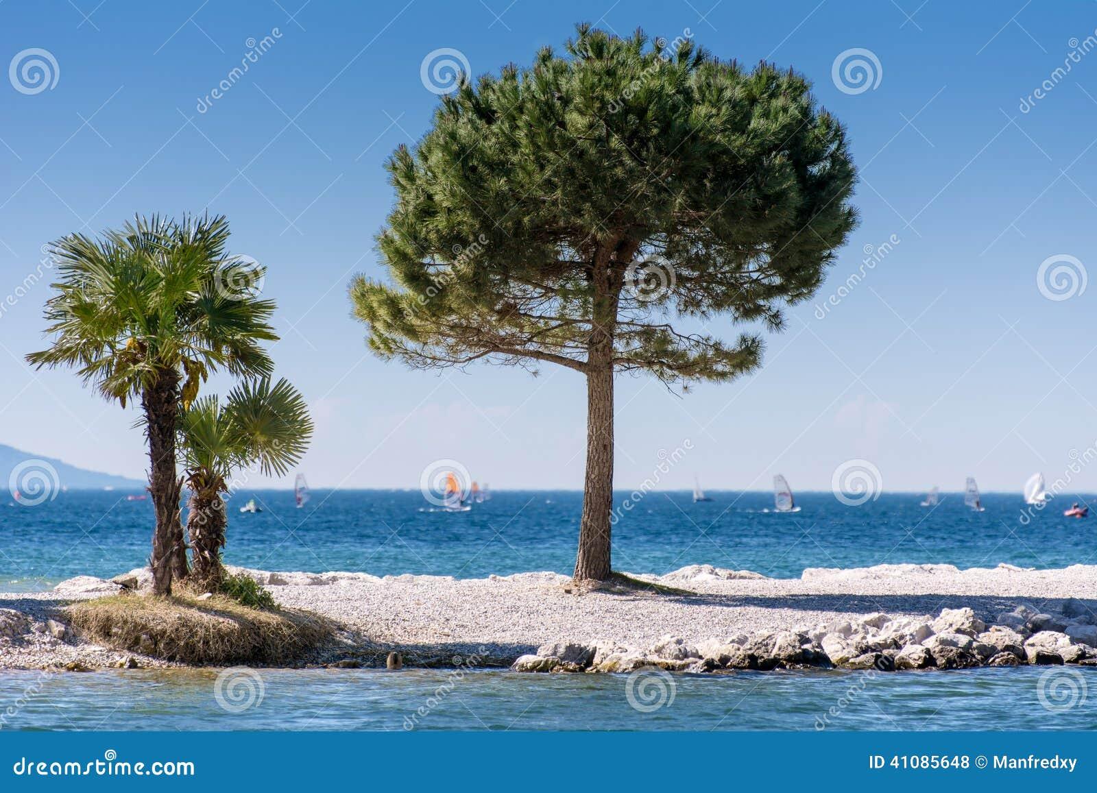 Träd på Lago di Garda Lakefront