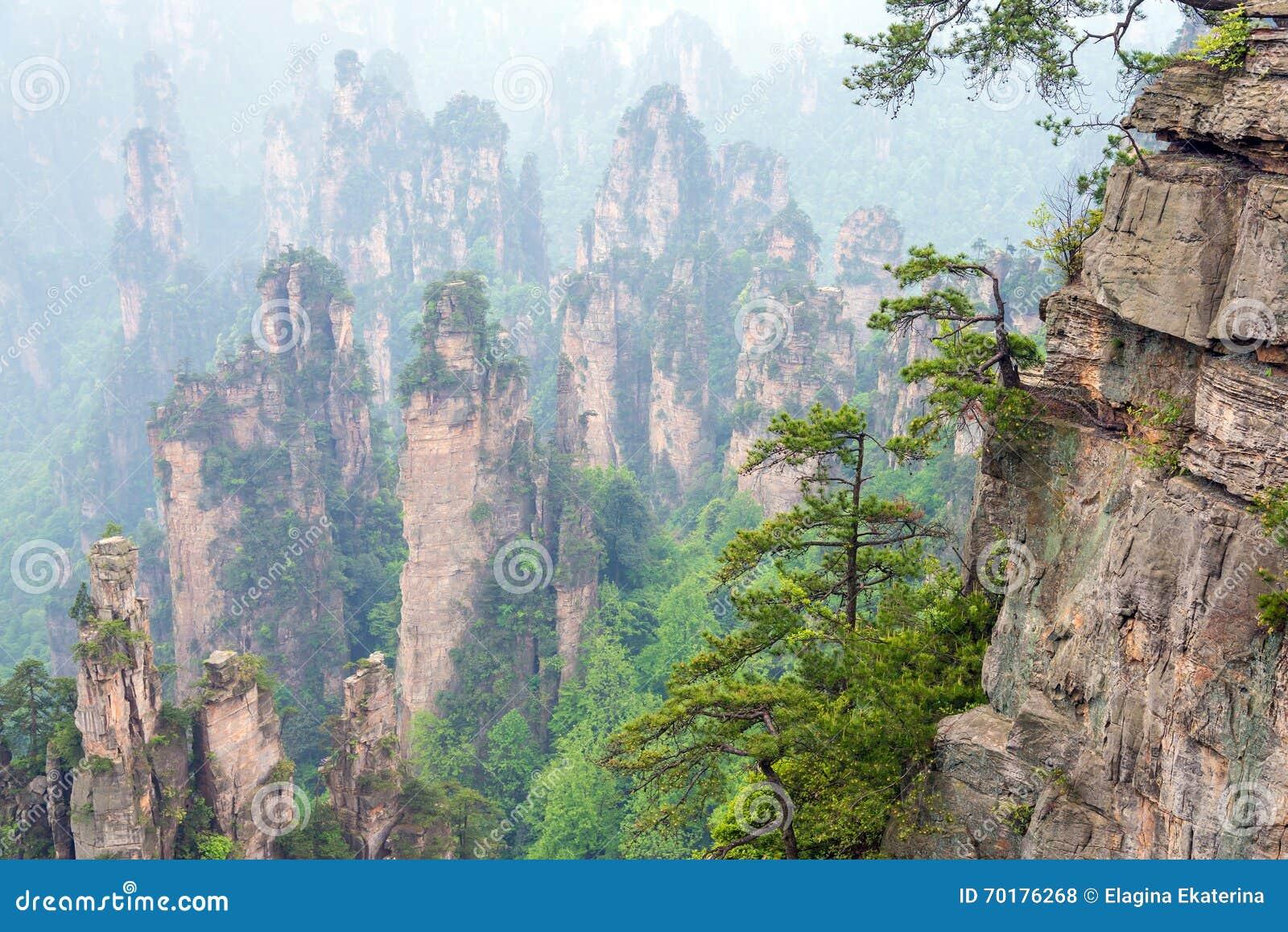 Träd vaggar på i den Zhangjiajie nationalparken i Hunan, Kina