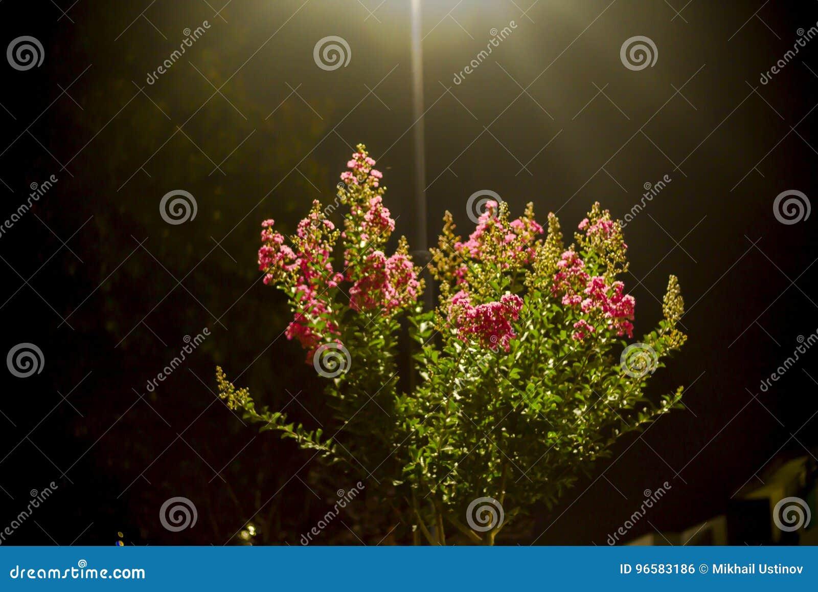 Trädblom