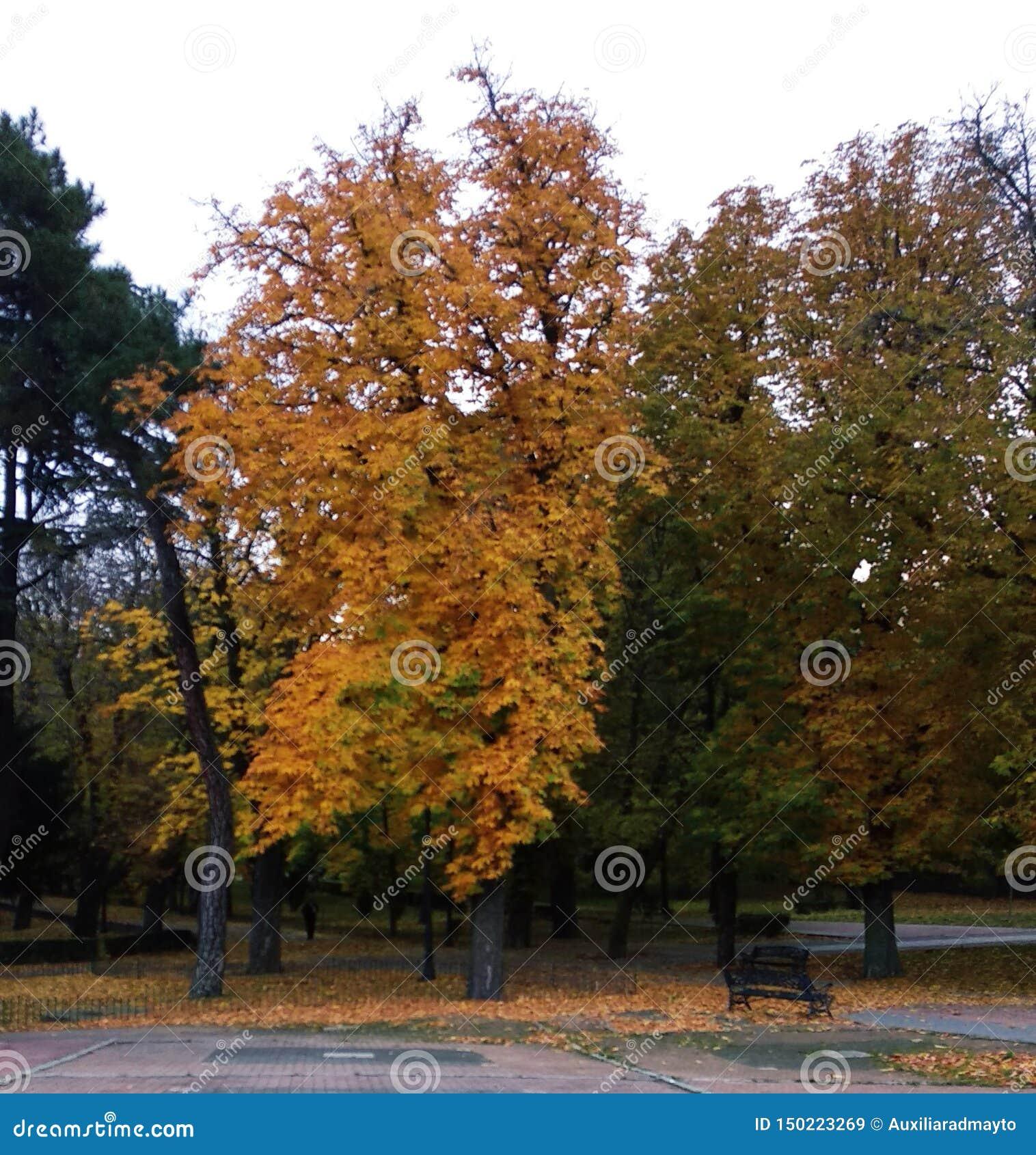 Träden av parkerar i höst