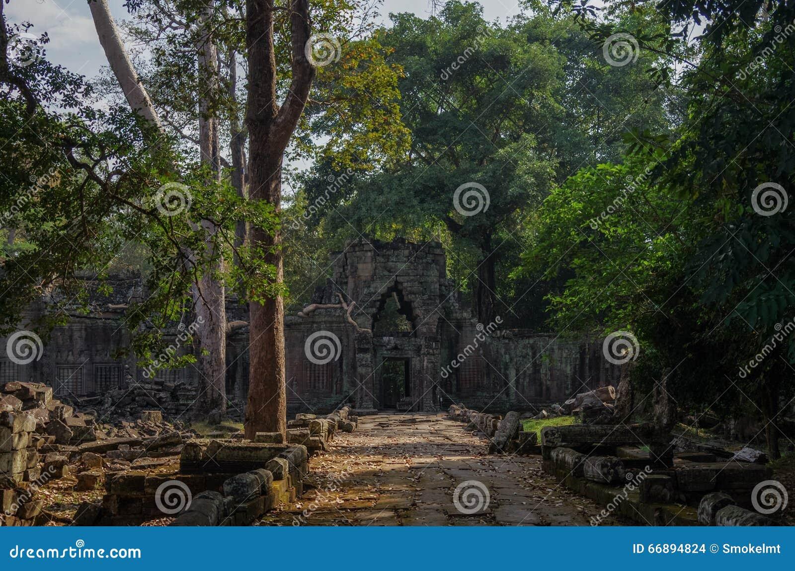 Trädet rotar att växa till och med fördärvar av templet för Ta Prohm på Angko