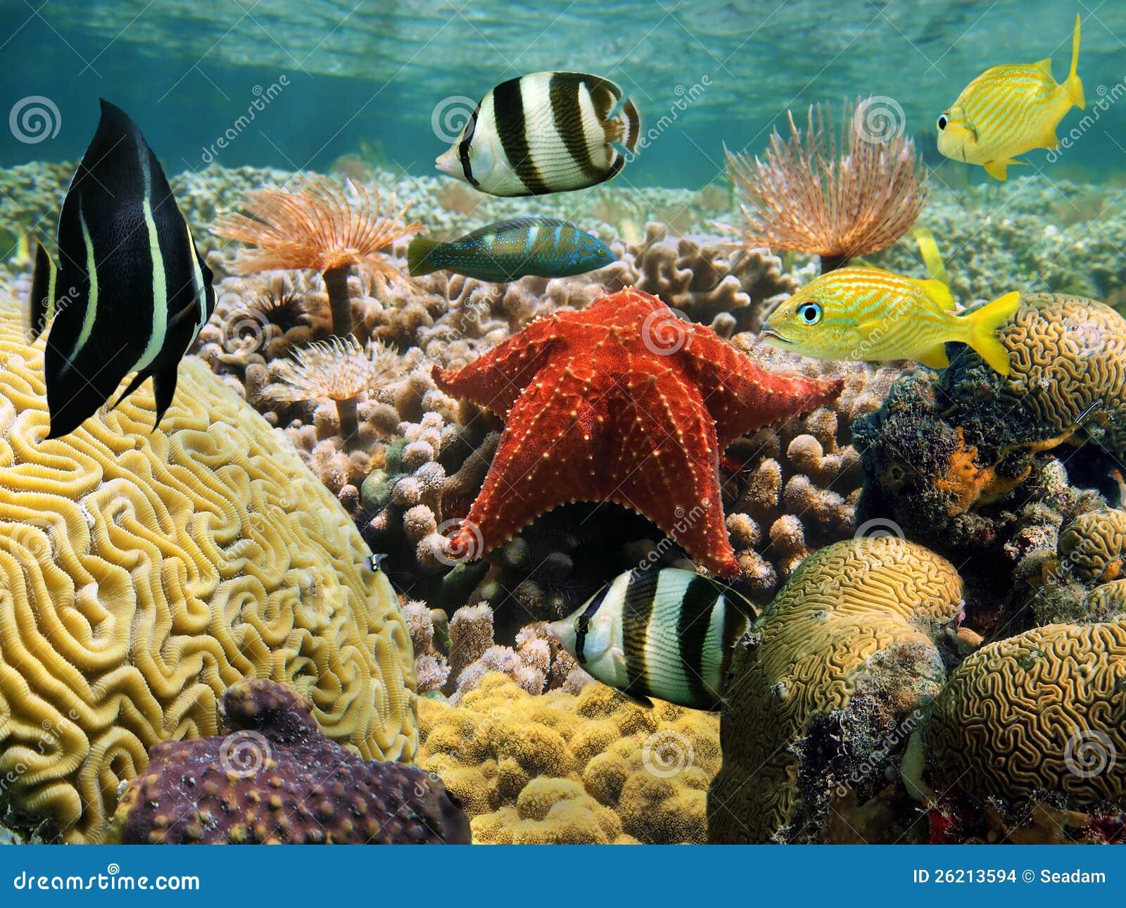 Trädgård av korall