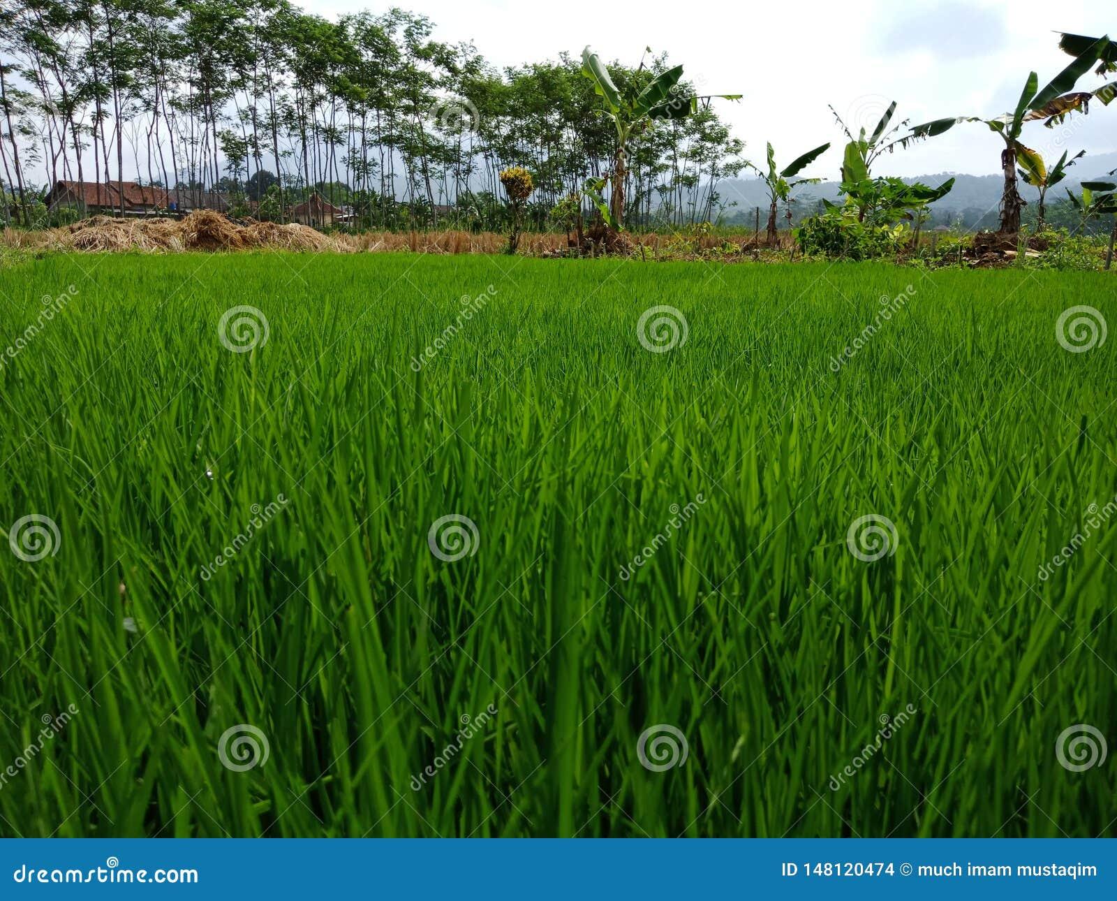 Trädgård för baground för grönt naturristräd utomhus-