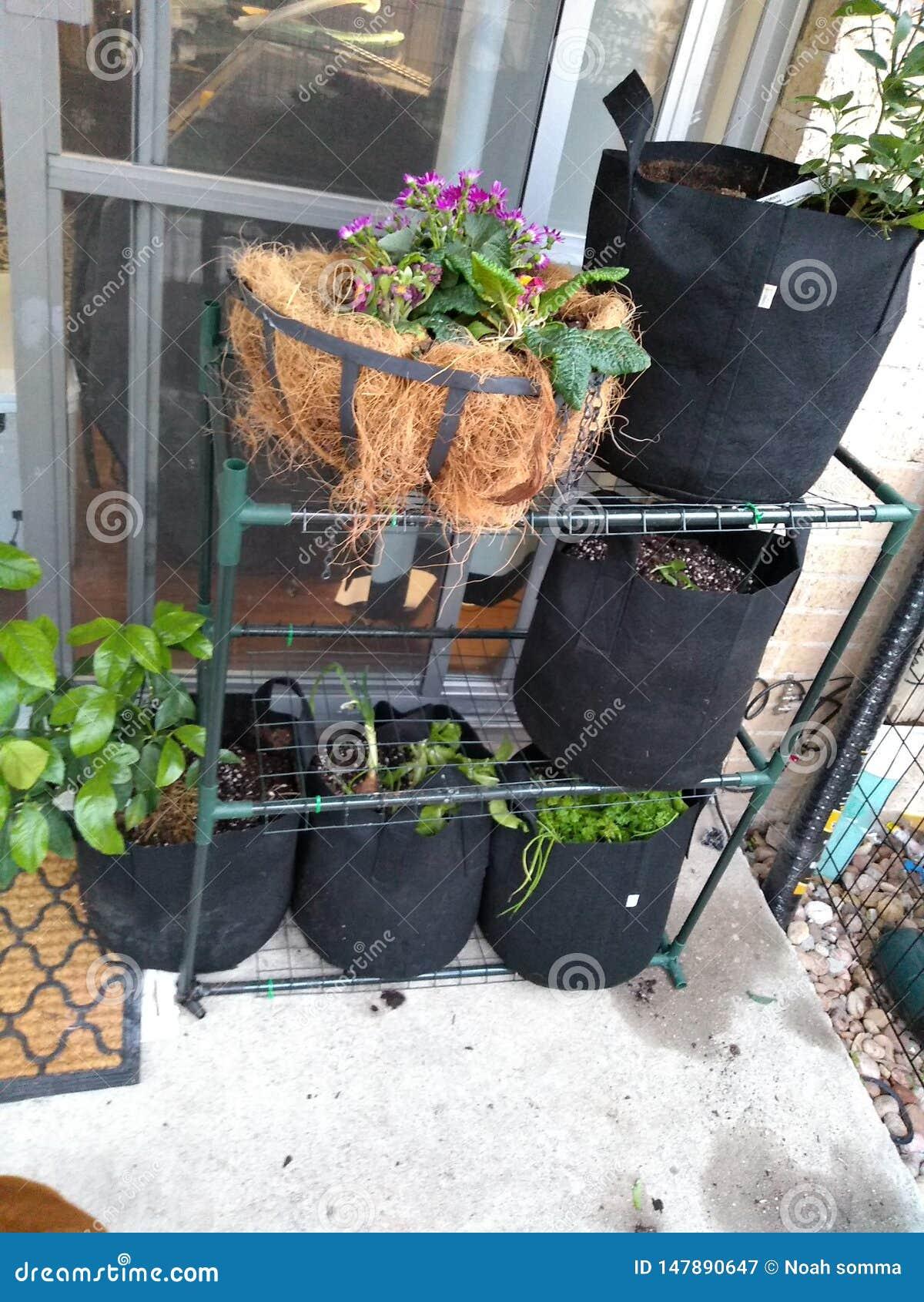 Trädgårdgrönsaksallad bantar krukan