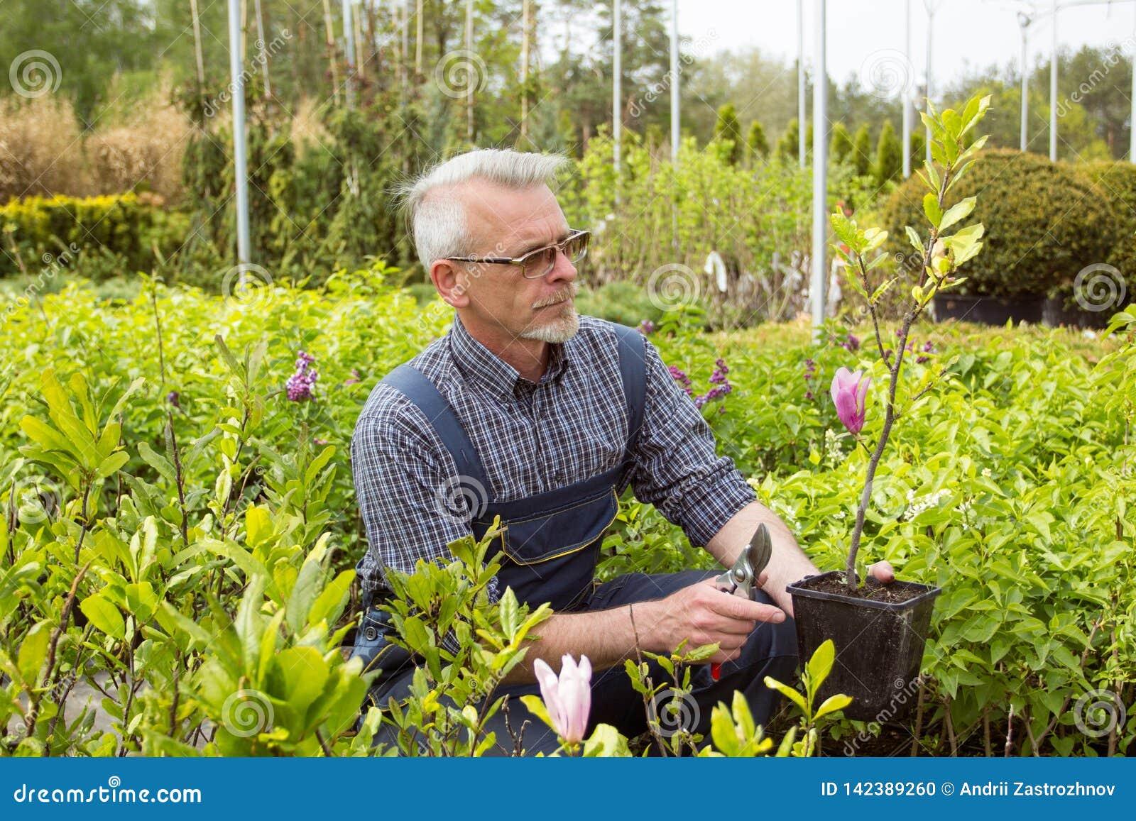 Trädgårdlagerchef som rymmer en blomma i en kruka