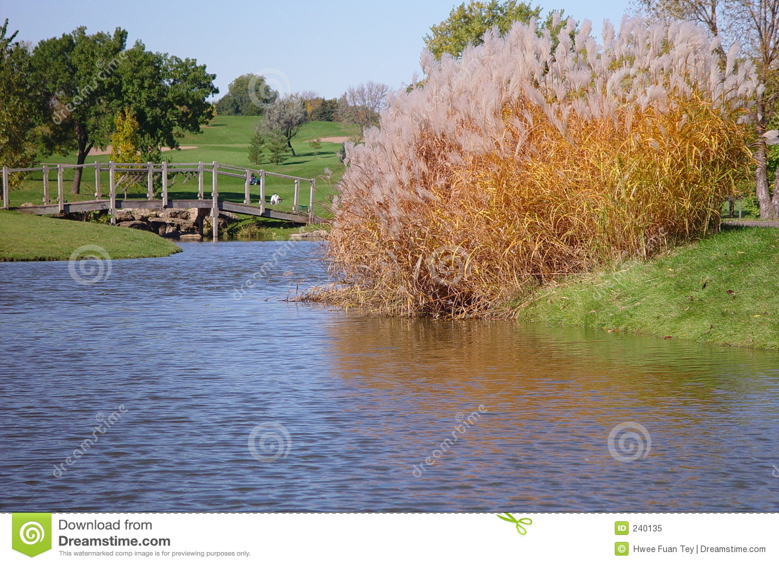 Trädgårds- damm